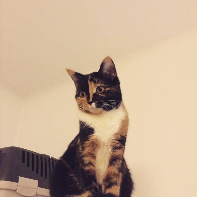 Koty po adopcji i po przejściach muszą na nowo zacząć ufać ludziom.