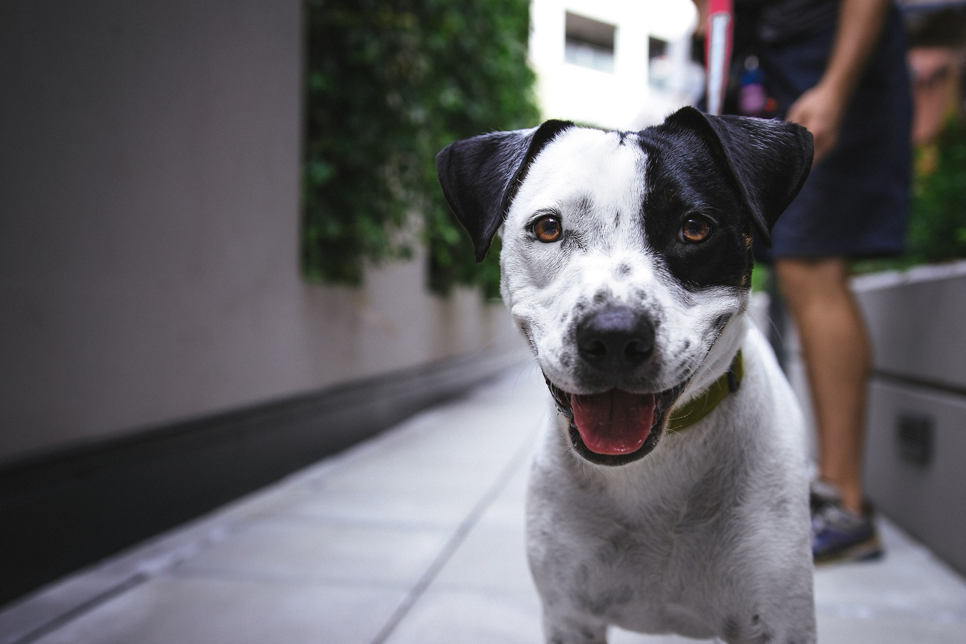 Zapalenie pęcherza u psa wymaga leczenia weterynaryjnego. Nie można podawać psu leków na własną rękę.