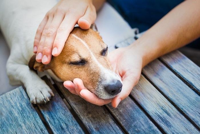 Przeziębiony pies w objęciach opiekuna.