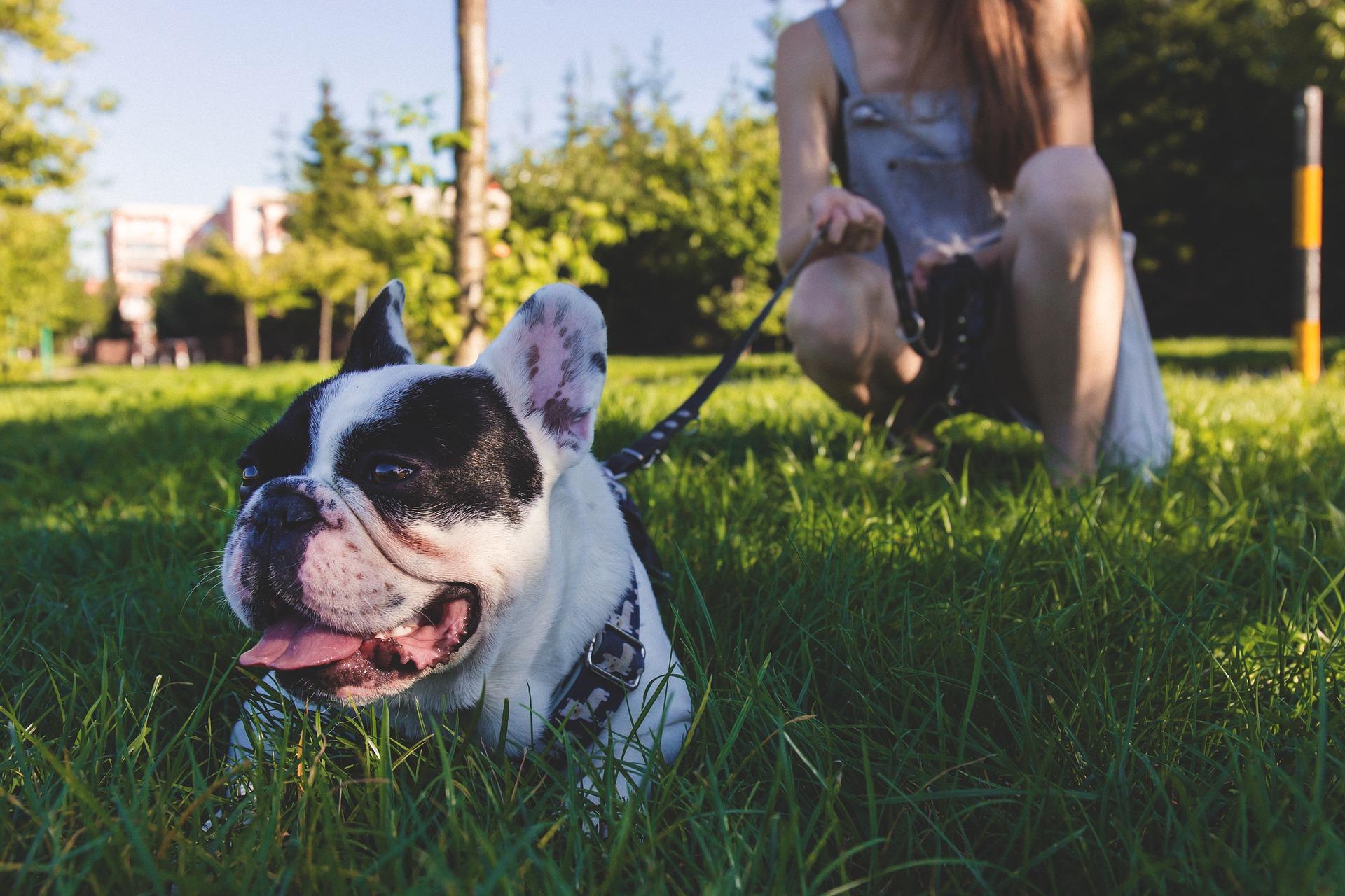 Przy nauce psa chodzenia na smyczy ważne jest pozytywne wzmacnianie, taka forma treningu jest najbardziej efektywna i najszybciej przynosi rezultaty, przy okazji dając frajdę psu i opiekunowi.