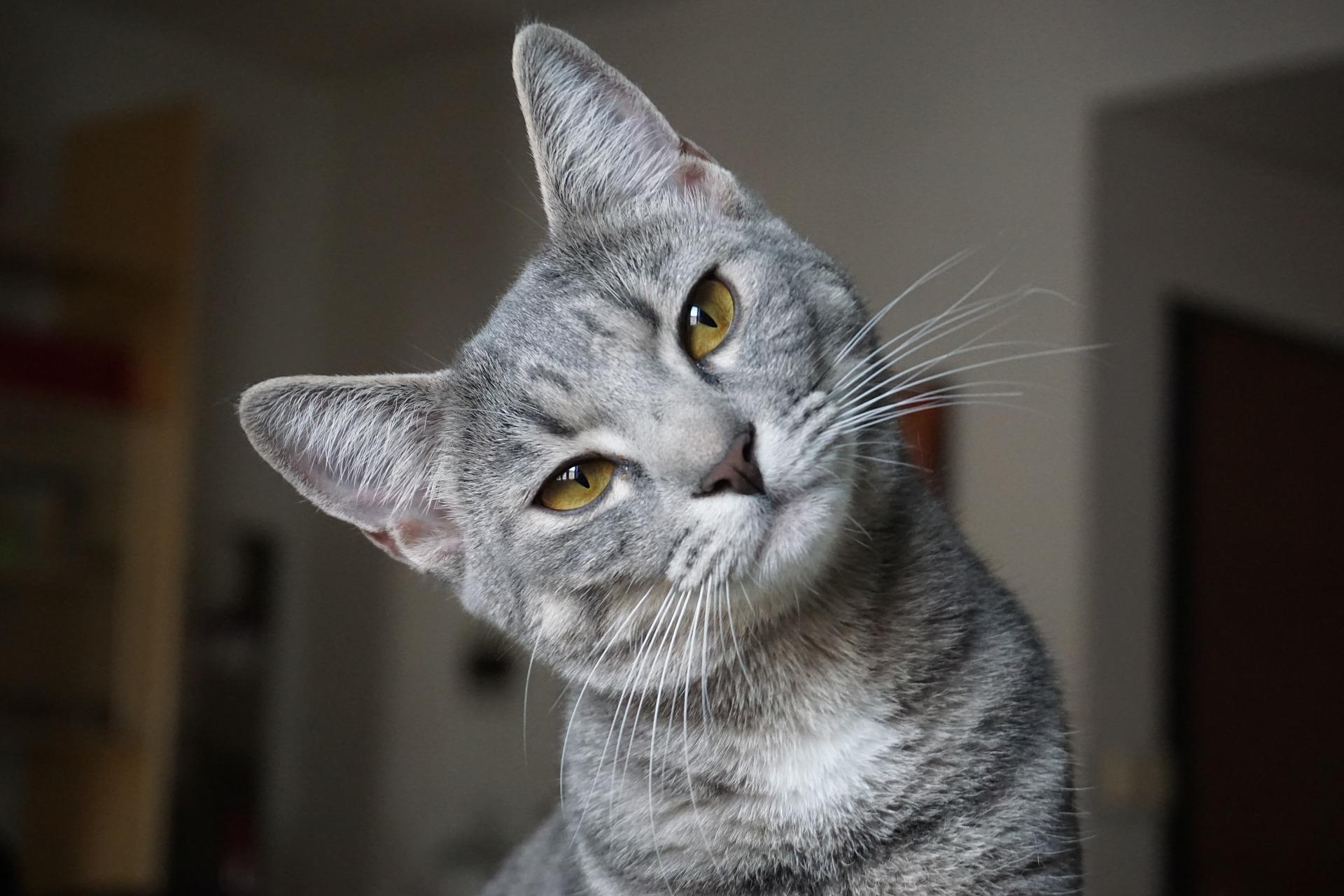Nadczynność tarczycy może dotknąć również koty i inne zwierzęta domowe. Objawia się ona spadkiem masy ciała, nerwowość, apatią, częstszym oddawaniem moczu.