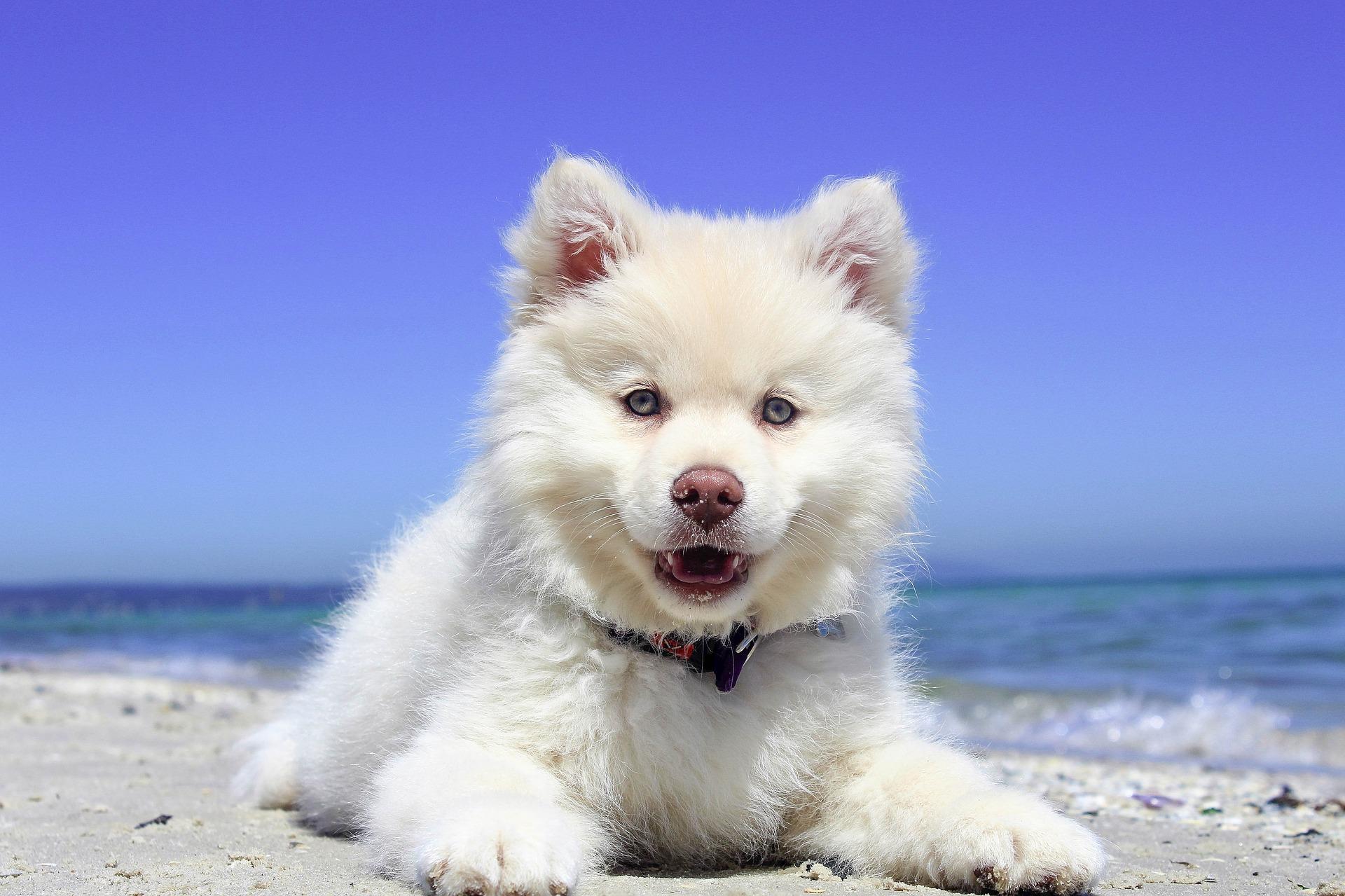 Wybierając się z psem na wakacje należy przygotować do niego wyprawkę, zaszczepić i zapewnić mu bezpieczną podróż.