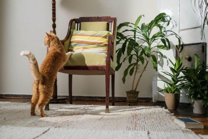 Rudy kot w mieszkaniu pełnym kwiatów i roślin.