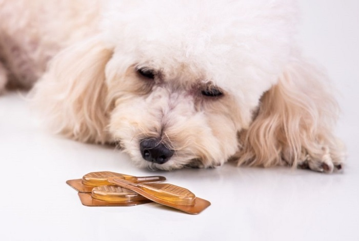 Pies wącha pipetki z biotyną.