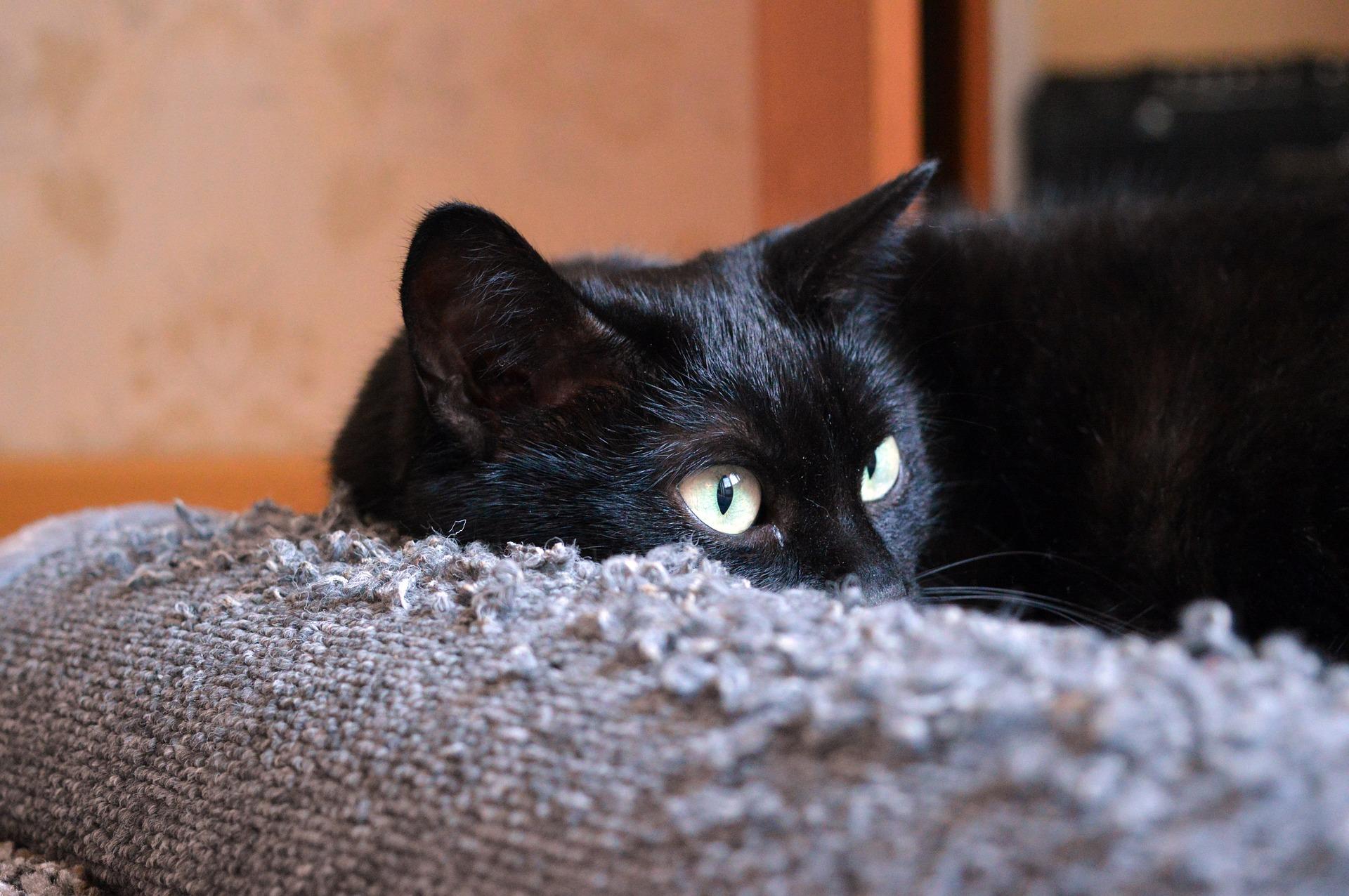 Jednymi z głównych przyczyn chorób układu moczowego u kotów są stres, otyłość, brak ruchu, odwodnienie, dieta bogata w węglowodany.
