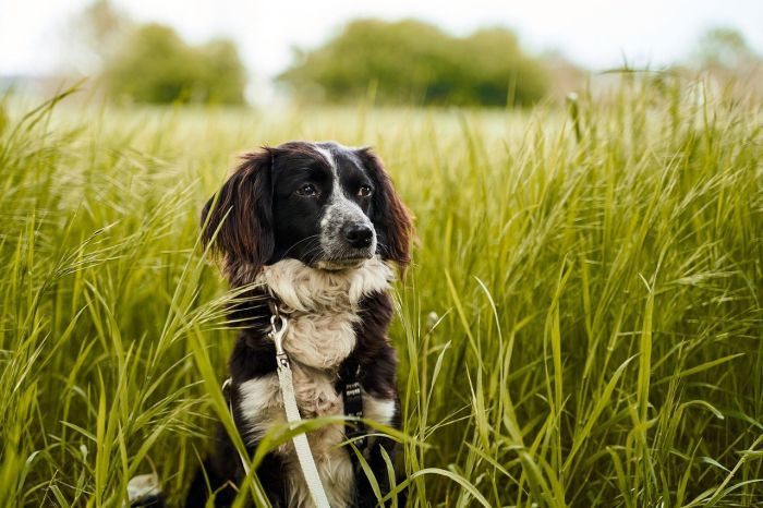 Pies w wysokiej trawie.