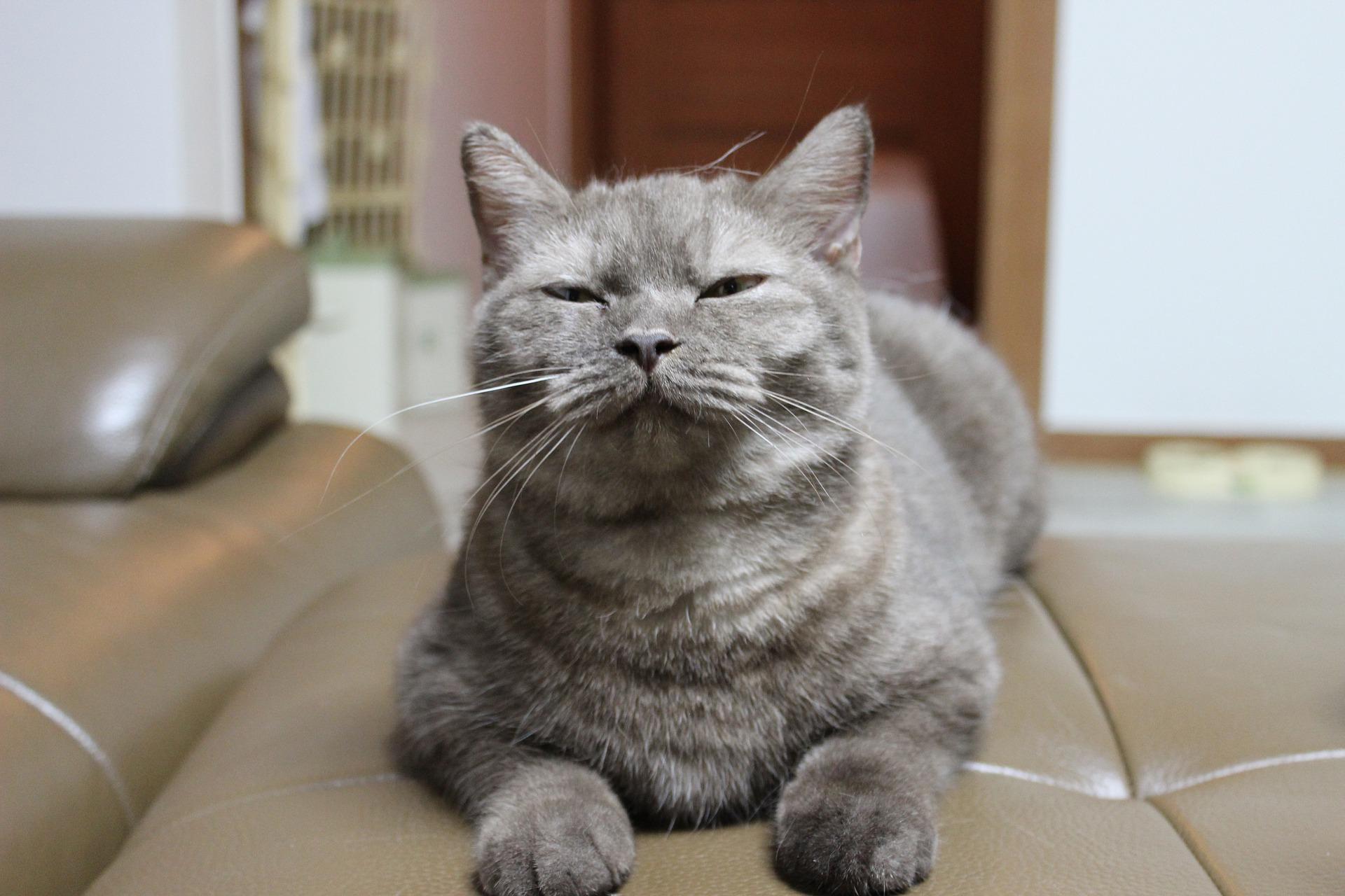 Koty domowe na przykład wyraźnie preferują pożywienie bogate w białko i tłuszcze zwierzęce. Są to substancje o kluczowym znaczeniu dla ich zdrowia.