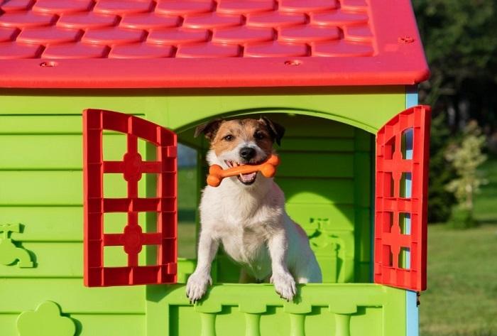 Pies w kolorowej budzie z zabawkami.