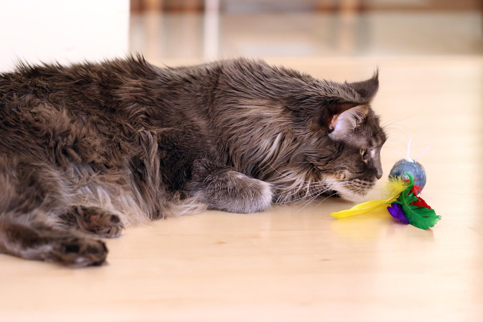 Zabawa z kotem powinna składać się z paru krótkich sesji. Po około 10 minut każda - zakończona schwytaniem zabawki, takich sesji może być kilka pod rząd - w zależności od kondycji kota. Zostawiając kota samego z zabawką należy mieć na uwadze, że nie jest ona niezniszczalna i należy często sprawdzać jej stan.