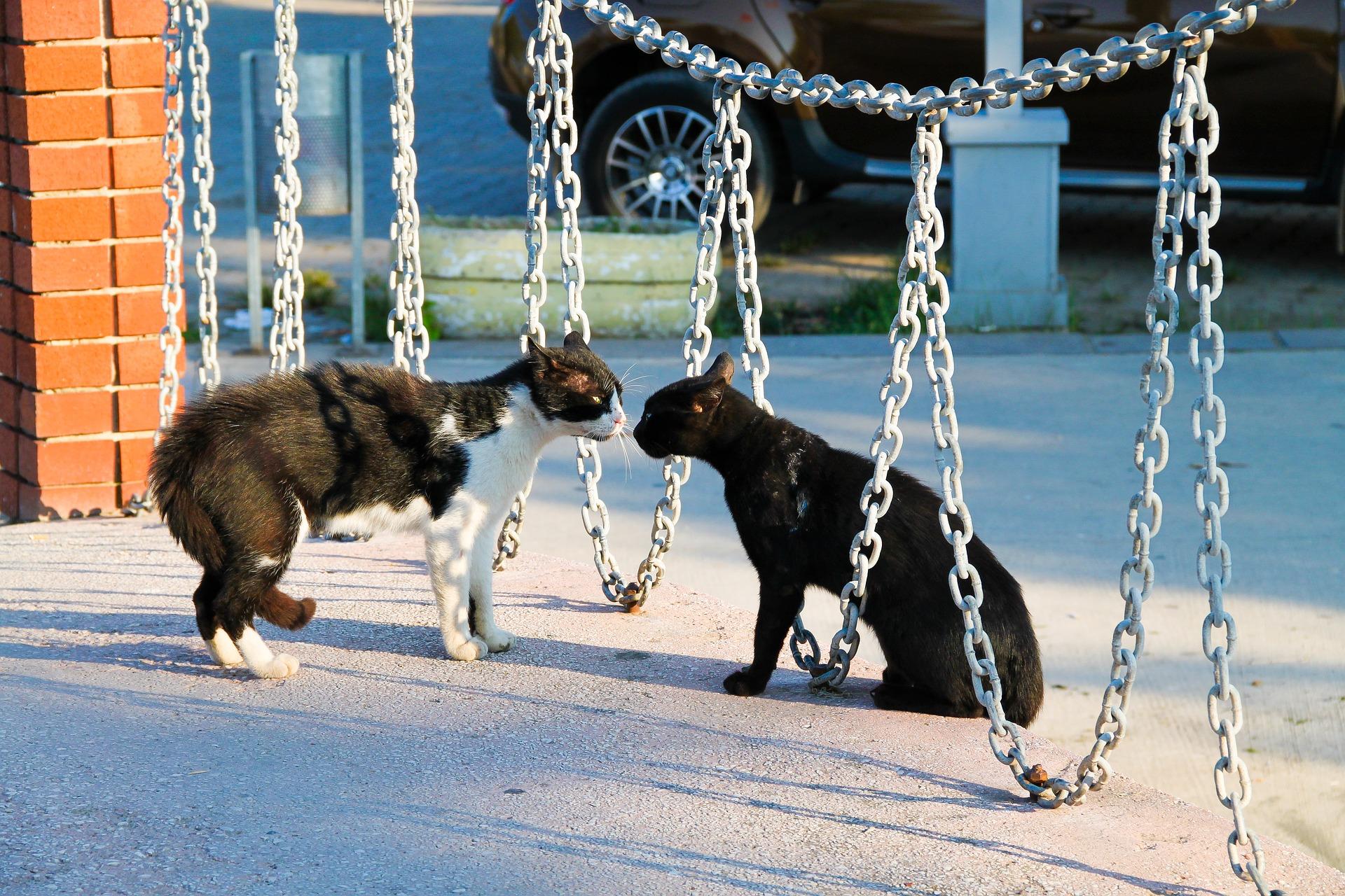 Łączenie kotów powinno odbywać się powoli i stopniowo z zachowaniem zasad izolacji z socjalizacją. W przeciwnym przypadku z pewnością pojawi się agresja wśród kotów, np. na podłożu terytorialnym.