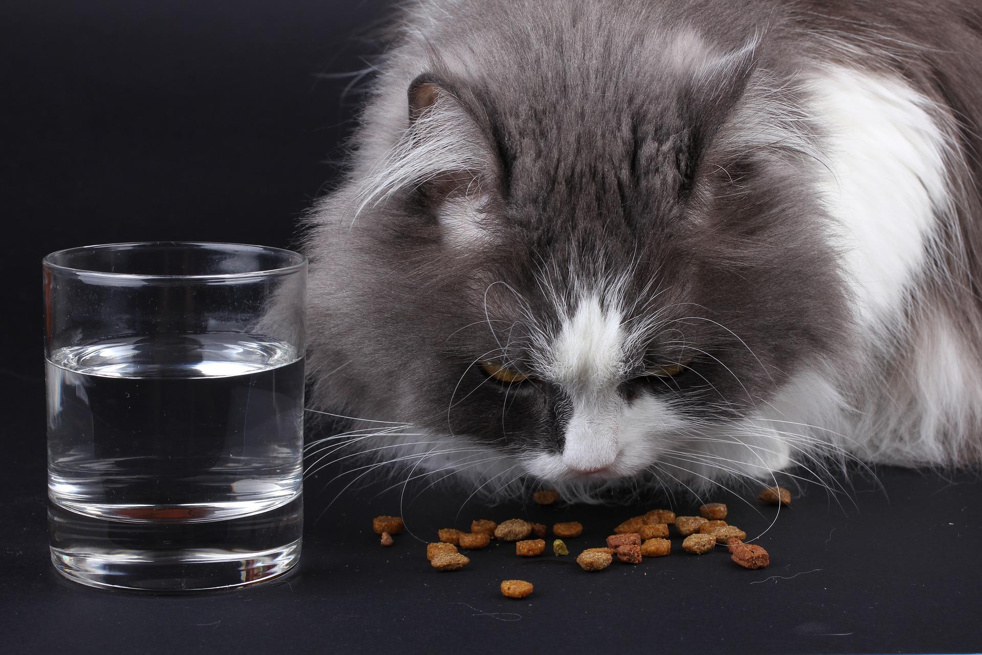 Zaleca się karmienie kota wysokomięsnymi karmami mokrymi, bez dodatku zbóż. Posiłków powinno być jak najwięcej, ale małych w ciągu dnia. Optimum to 3-4.