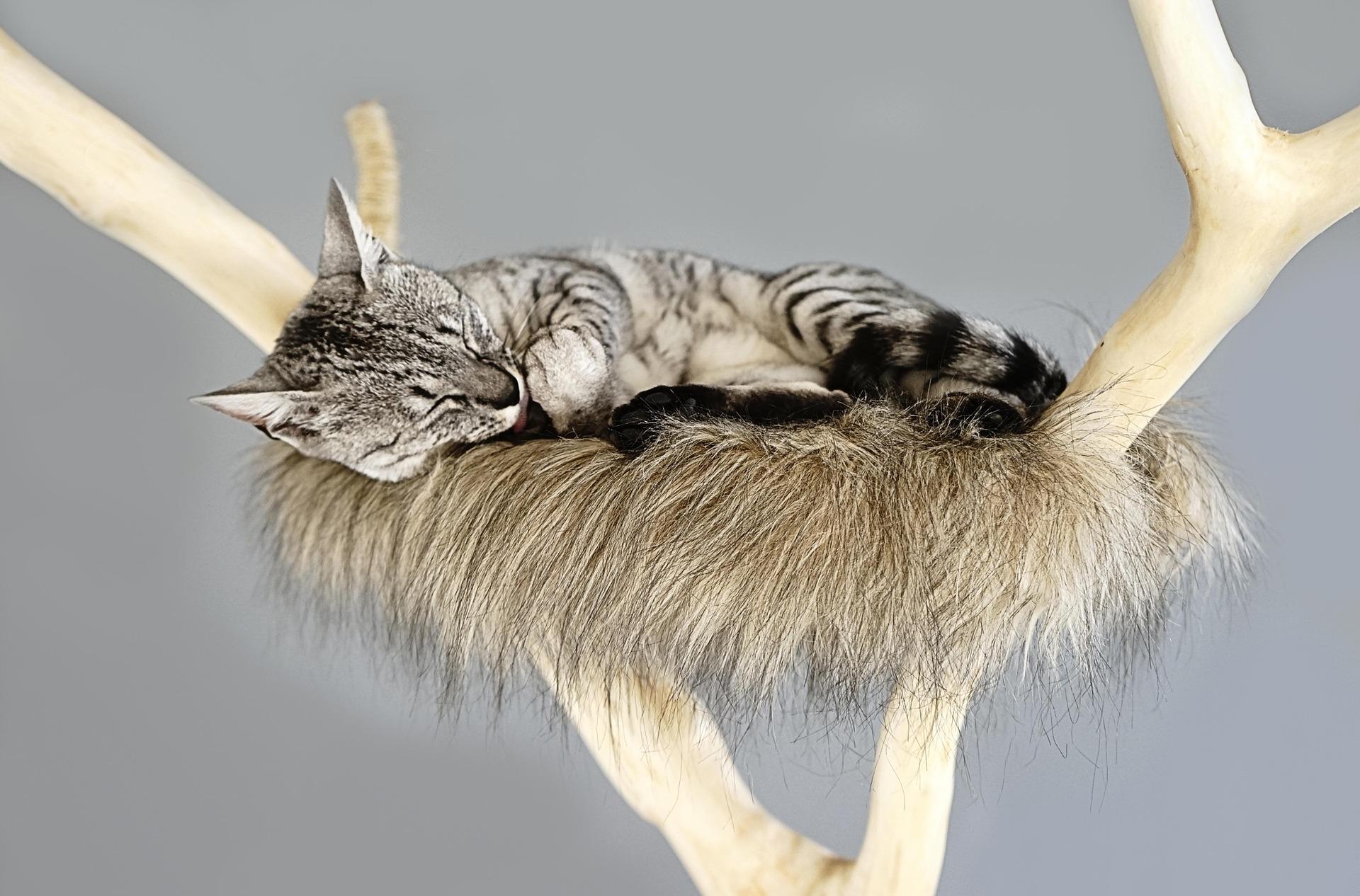 Hamak dla kota to legowisko wiszące. Najczęściej wykonane jest z miękkiej tkaniny, ale nie brak też modeli o sztywnej konstrukcji.