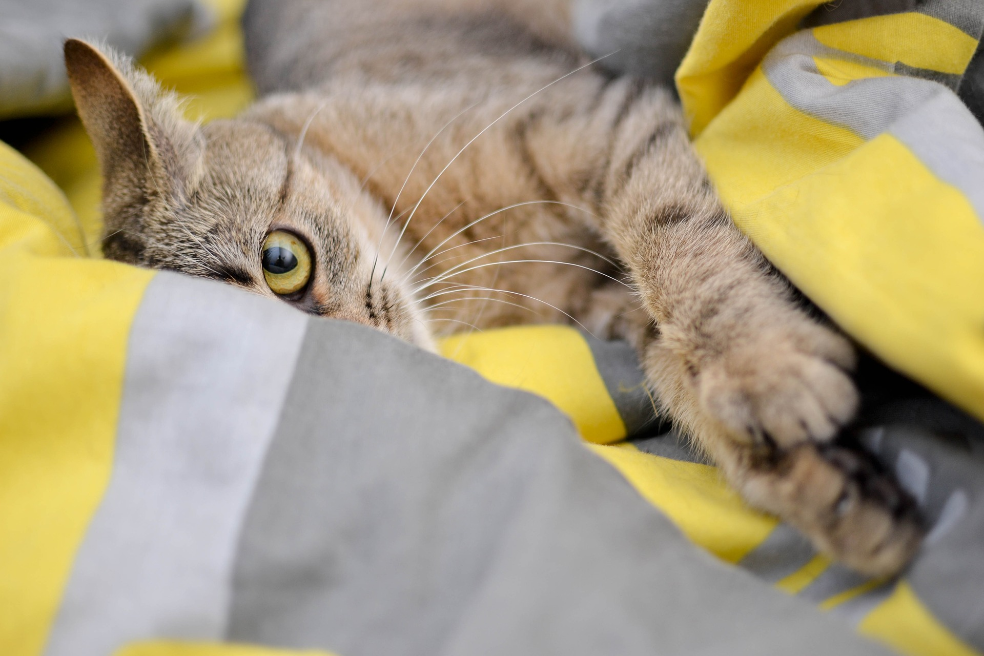 Sterylizacja kota to zupełnie inny zabieg niż kastracja. Zaleca się kastrować koty w około 3 miesiącu życia, przed rozpoczęciem znaczenia i przed pierwszą rują.