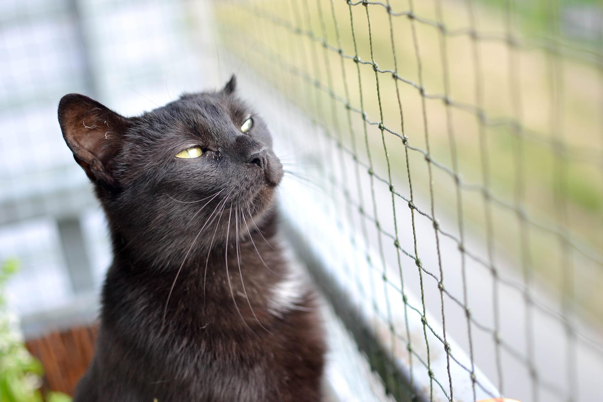 Siatka na balkon dla kota może uchronić jego zdrowie i życie.