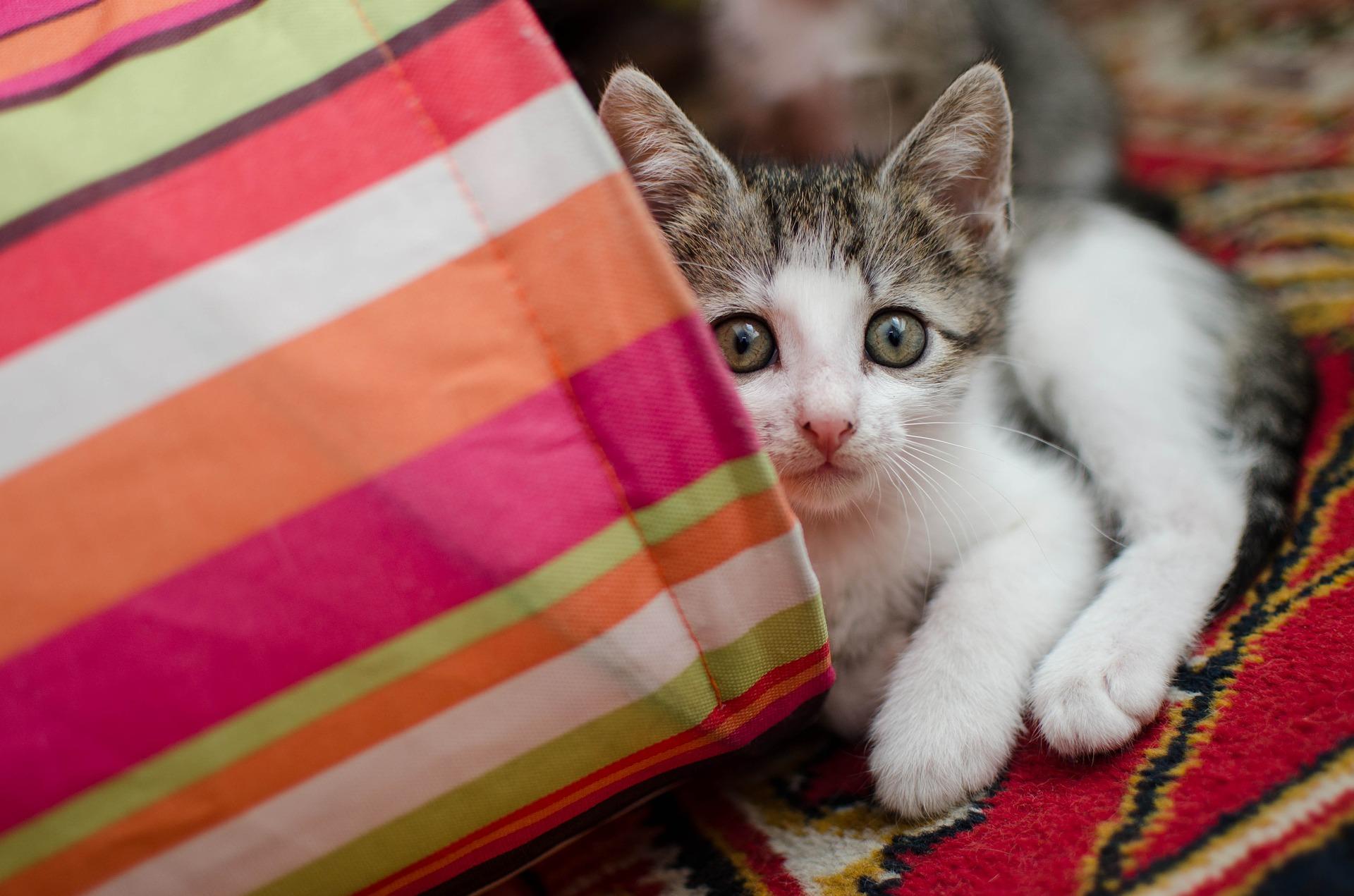 Nim mały kotek pojawi się w domu, trzeba przygotować się na jego przybycie. Niezbędne jest skompletowanie kociej wyprawki.
