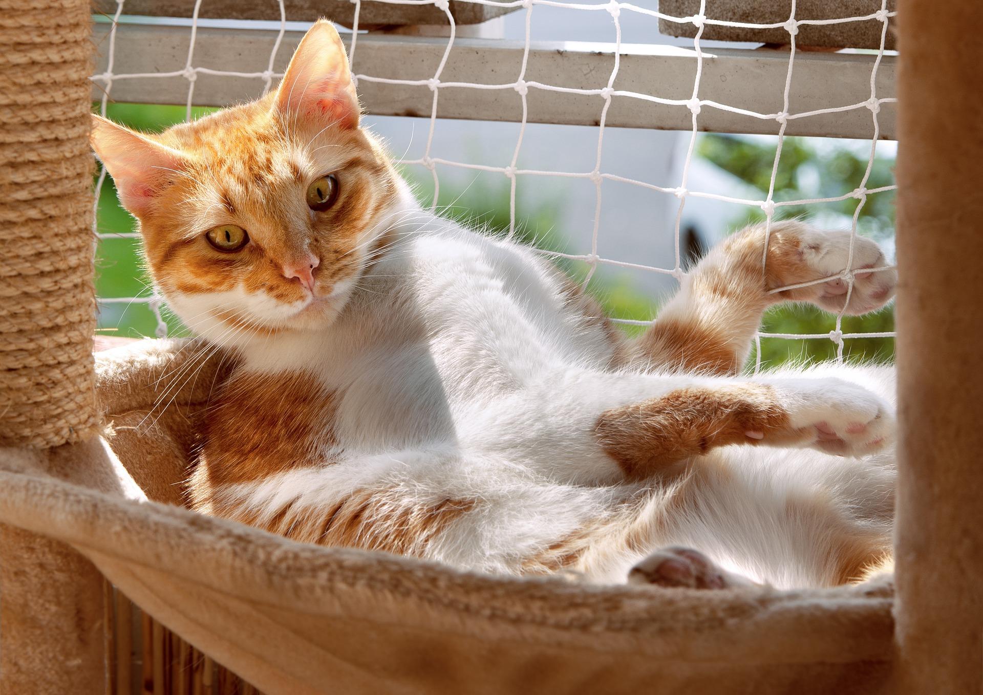 Przebywanie na balkonie wraz z kotem jest bardzo przyjemnym zajęciem. Zróbmy jednak wszystko, aby było to też bezpieczne.