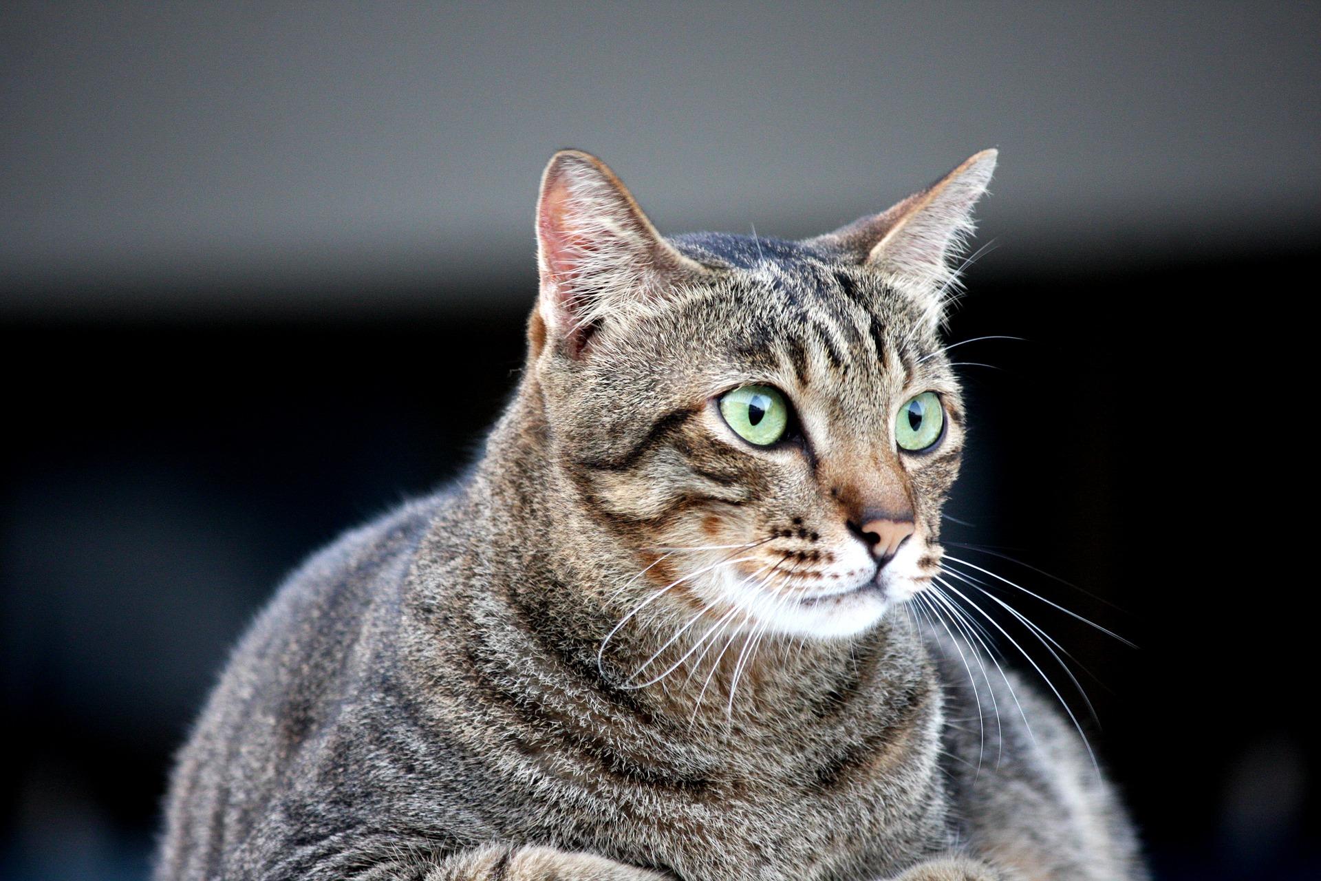 Otyłość u kotów rozpoczyna się, gdy prawidłowa masa ich ciała zwiększa się o 15 - 20%.