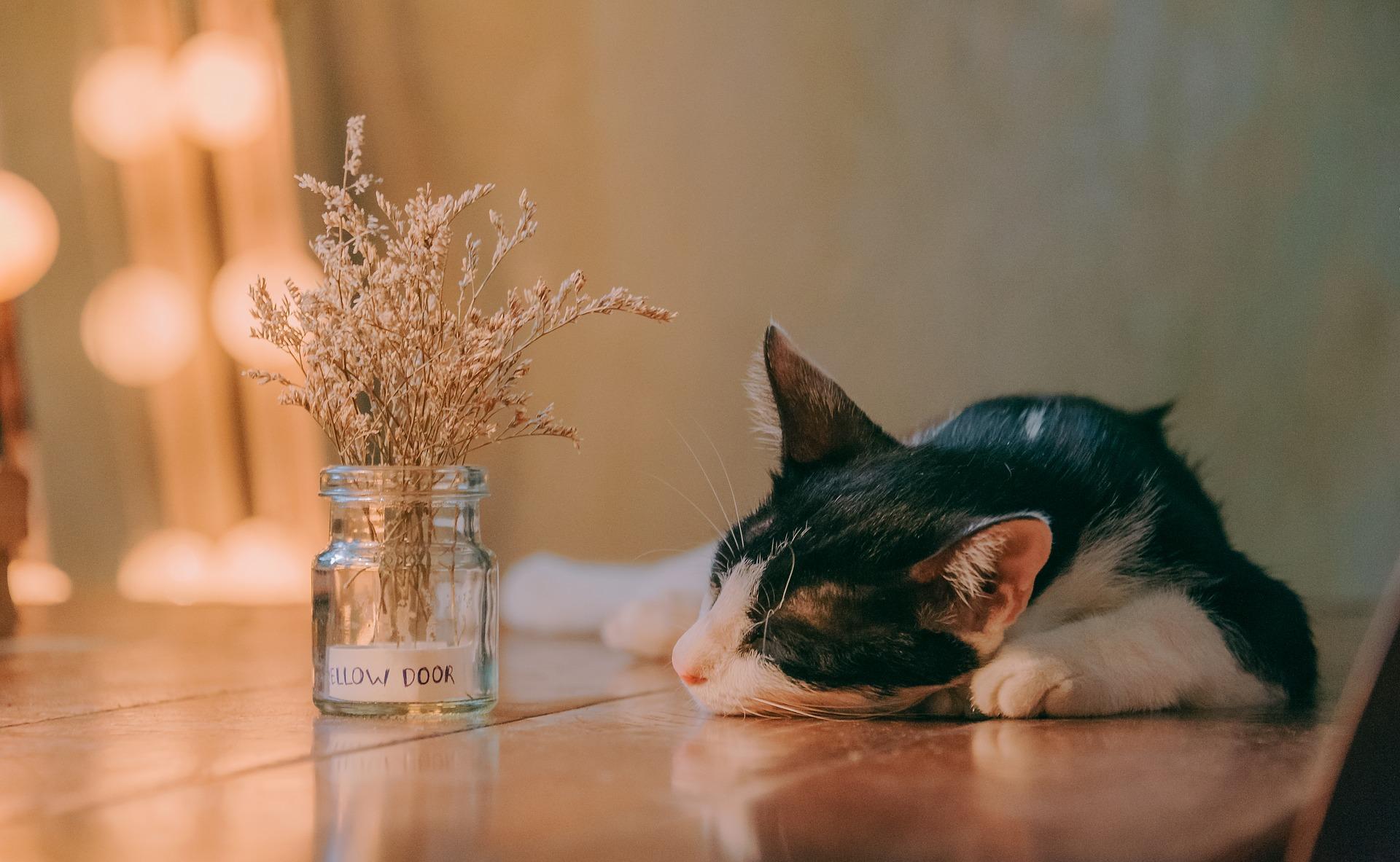 Niewydolność nerek u kotów jest już jednostką chorobową cywilizacyjną. Każdy kot, bez odpowiedniej diety i dawki ruchu, narażony jest na jej rozwinięcie.