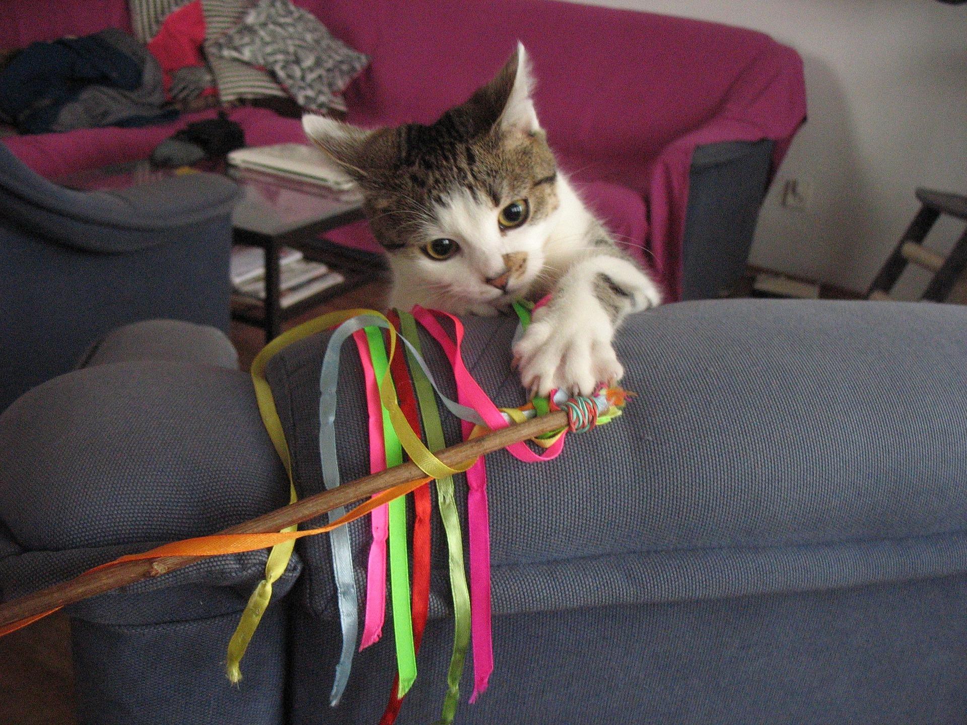 Zabawa jest dla kotów bardzo ważna, pozwala zaspokoić komfort psychiczny i stabilność emocjonalną. Można wprowadzać różne zabawy - wędką, piłeczkami, myszkami, samodzielnie wykonanymi zabawkami lub tymi interaktywnymi.