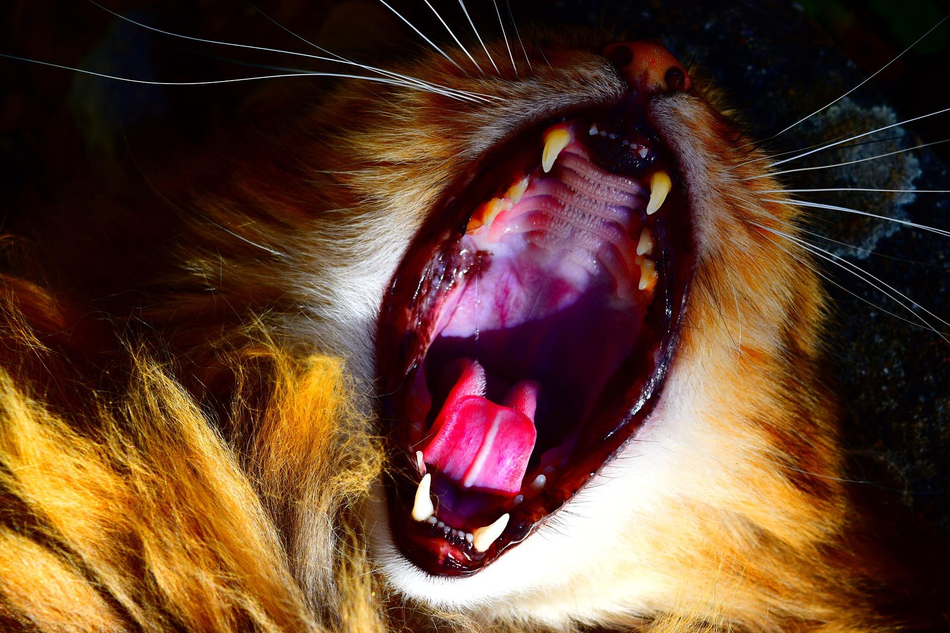 Aby zapobiec zapaleniu dziąseł u kota, należy przede wszystkim dbać o higienę jego jamy ustnej oraz zapewnić mu prawidłową dietę.