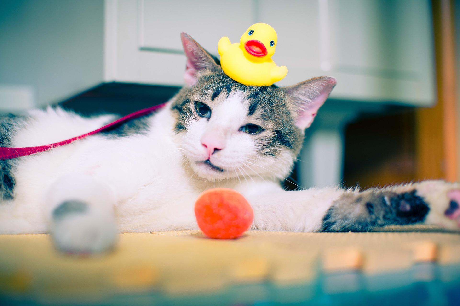 Kąpanie kota zalecane jest jedynie w wyjątkowych sytuacjach, przy chorobach skóry, pasożytach, czyli po wskazaniu lekarza weterynarii lub w przypadku bardzo silnych zabrudzeń, po zlizaniu których może ucierpieć zdrowie kota.