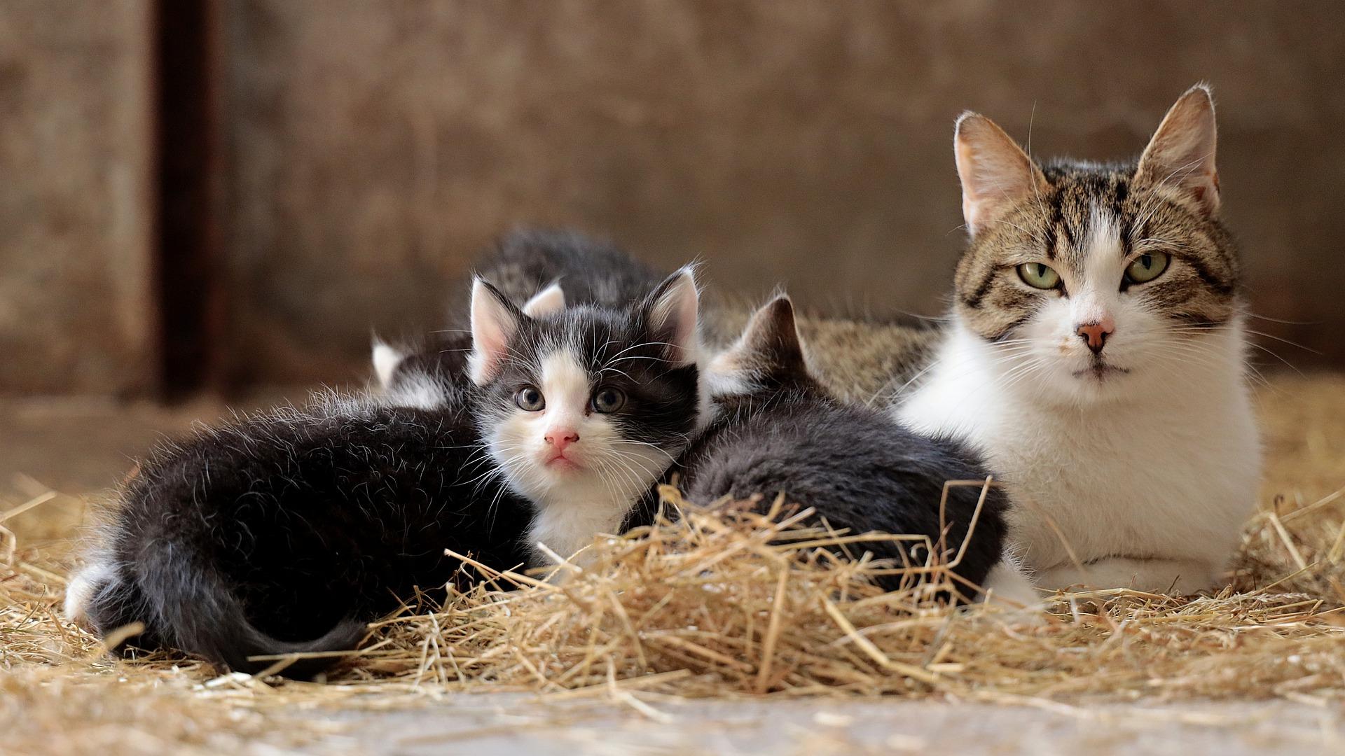 Ciąża znacząco zwiększa możliwość wystąpienia chorób układu płciowego oraz nowotworów. Wbrew panującej opinii kotka nie musi mieć jednego miotu w życiu.