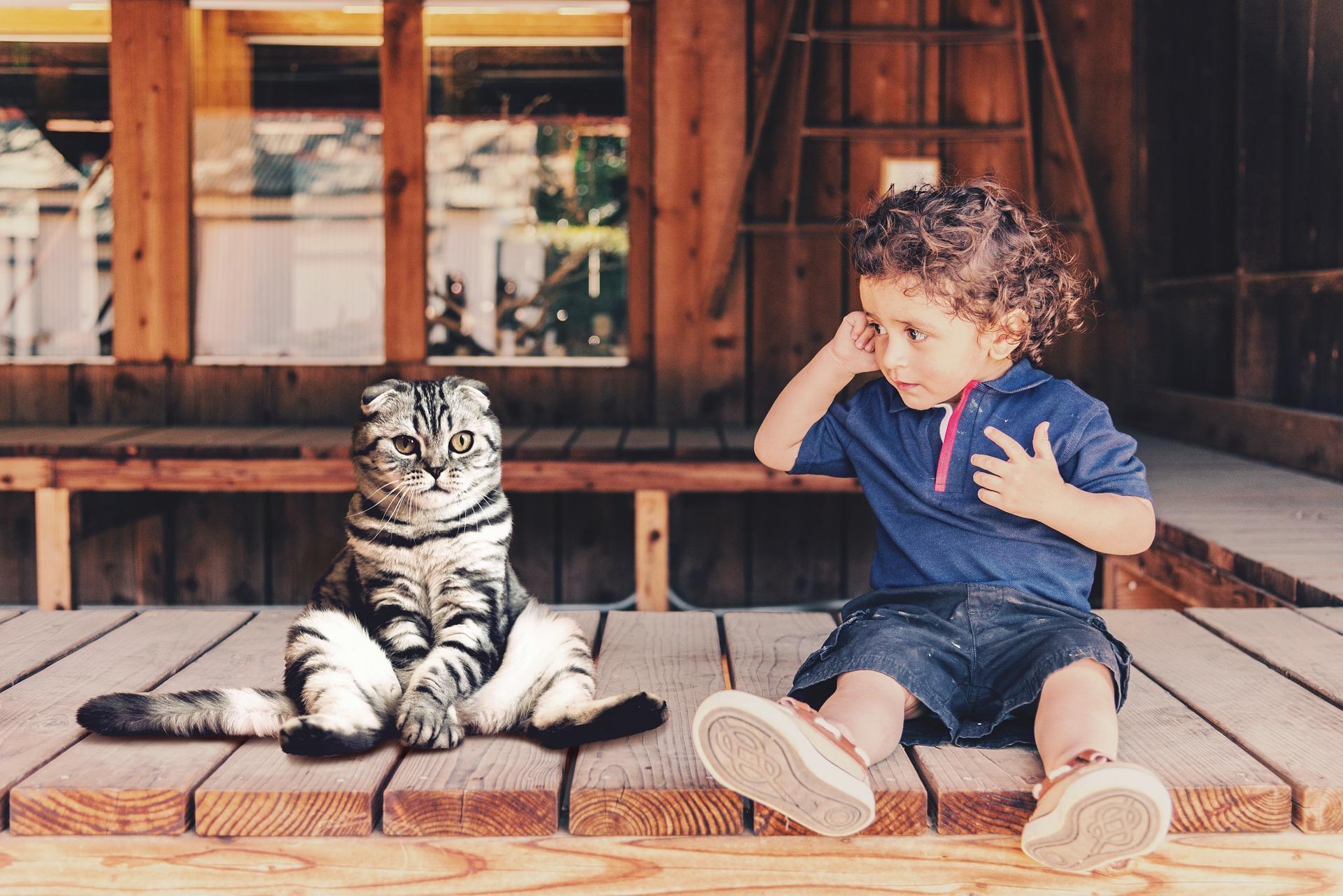 Dziecko od najmłodszych lat powinno być uczone szacunku do zwierząt i umiejętnego okazywania im uczuć. Idealna rasa kota dla dziecka nie istnieje, należy kierować się rozsądkiem i nauczyć dziecko obchodzenia ze zwierzętami, a wtedy stworzą silną i piękną więź.