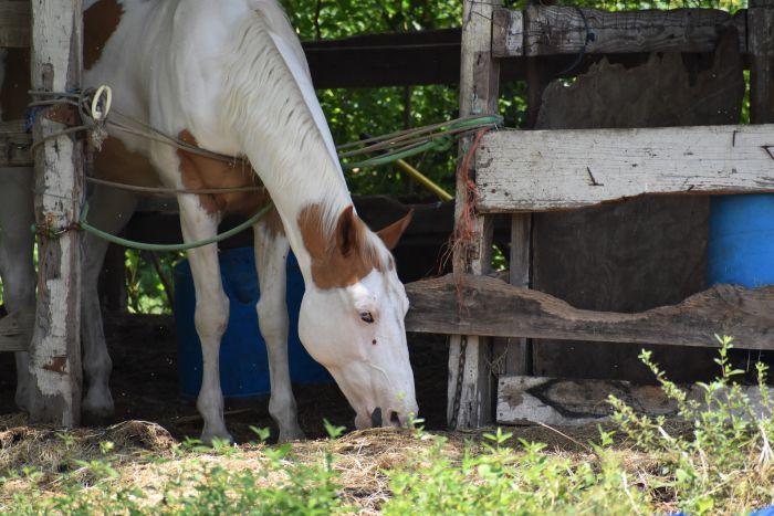 Koń je trawę z boksu