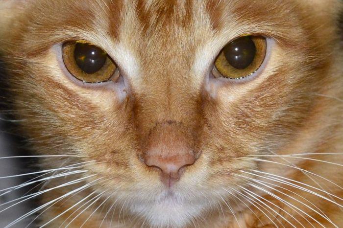 Kot z zaczerwienionymi oczami.