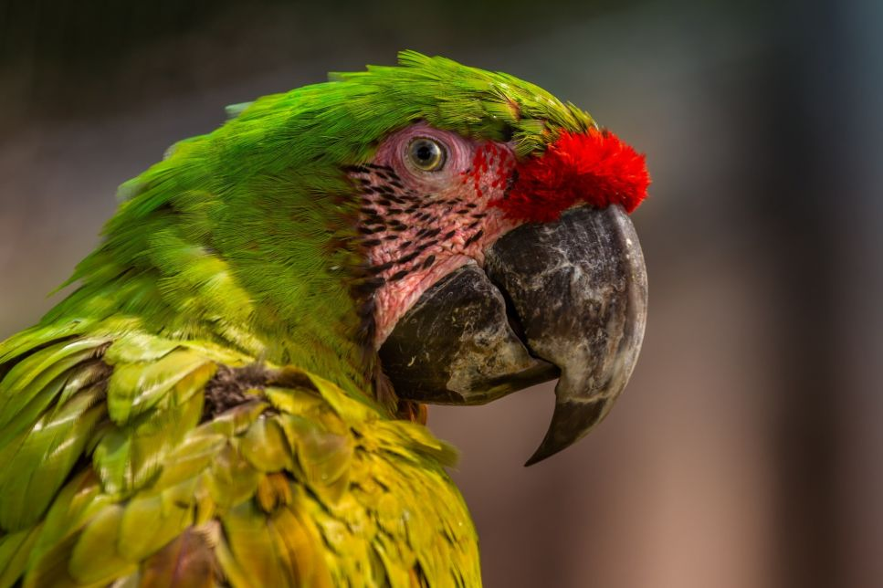 Chora i papuga z widocznie uszkodzonym dziobem, słabymi piórami, skórą wokół oczu.
