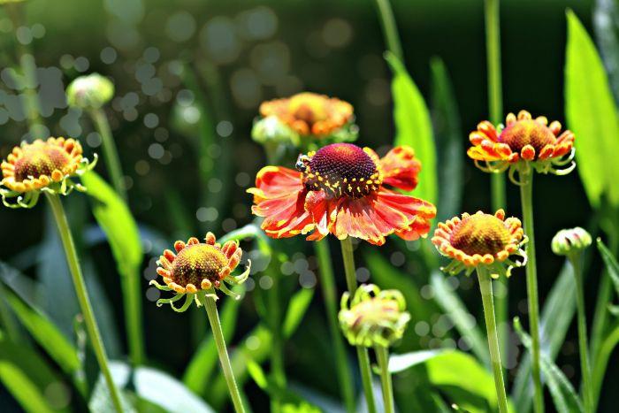 Kwiaty w ogrodzie.