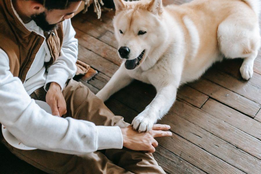 Pies podczas zabawy z opiekunem. Psy z natury są radosne i chętne do zabaw, apatyczny pies to powód do niepokoju.