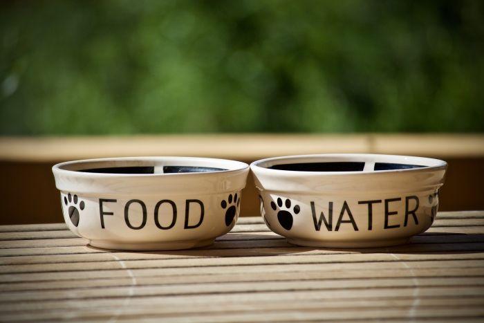 Miski ceramiczne dla psa na karmę i wodę.