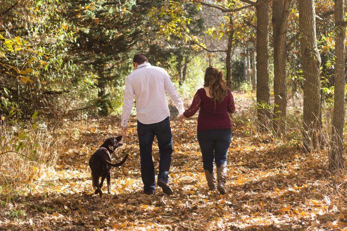 Labrador na spacerze w lesie.