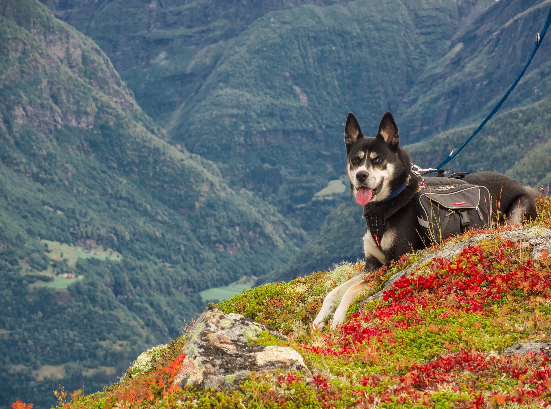 Psa trzeba także zabezpieczać przed pchłami i kleszczami zaleconym przez lekarza preparatem (np. kroplami typu spot-on czy specjalną obrożą).