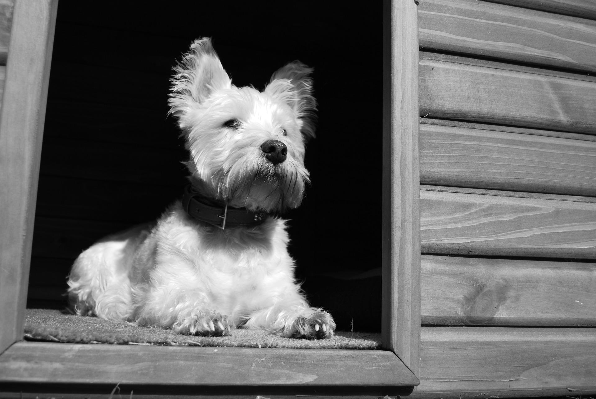 Gdy pies ma pilnować domu na zewnątrz, trzeba zapewnić mu suche i ciepłe schronienie. Wymiary budy muszą być dopasowane do wielkości zwierzęcia, tak aby mógł on swobodnie się w niej poruszać i obracać.
