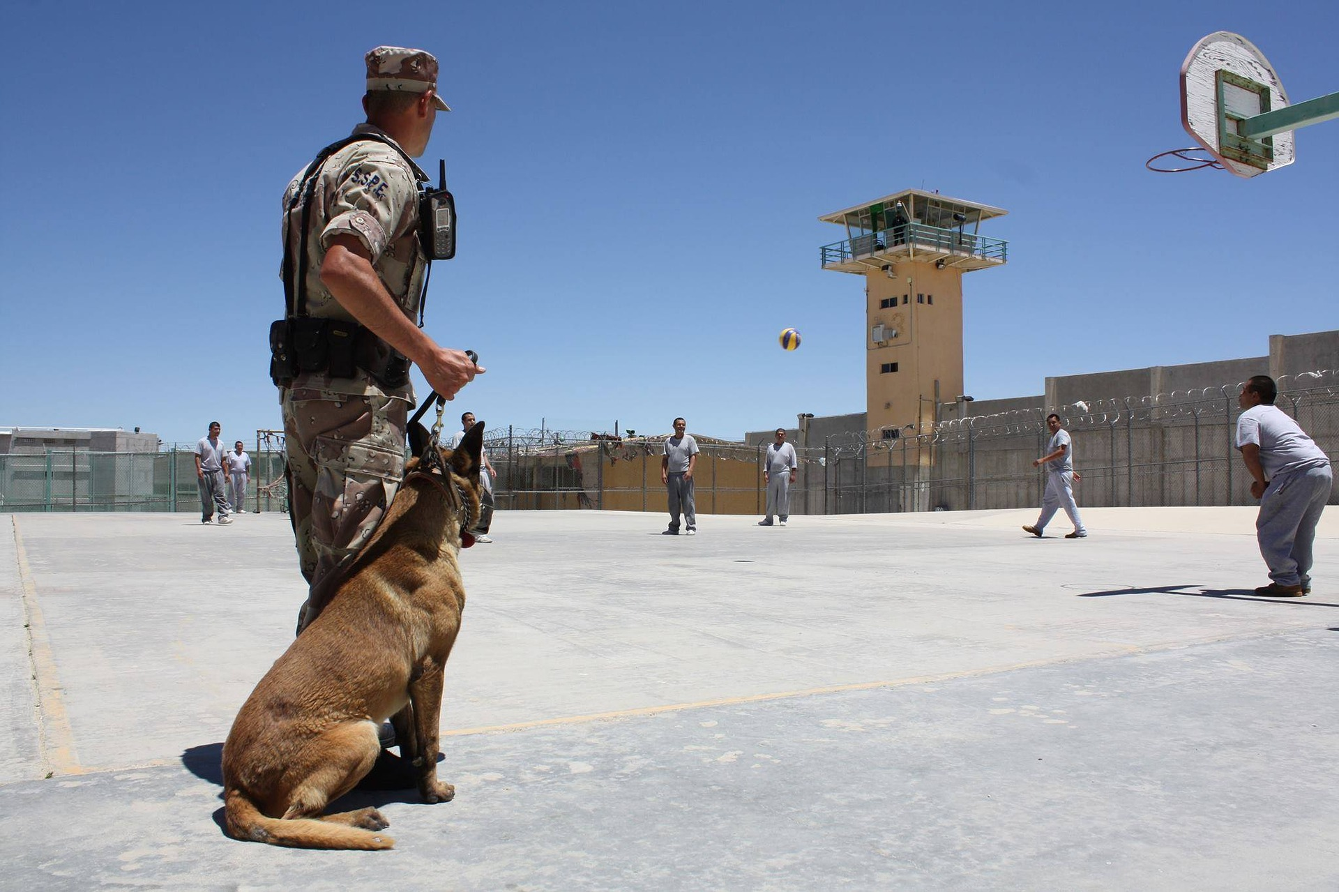 Psy policyjne czy ratownicze pracują tylko określony czas. Po służbie zazwyczaj zostają ze swoimi opiekunami.