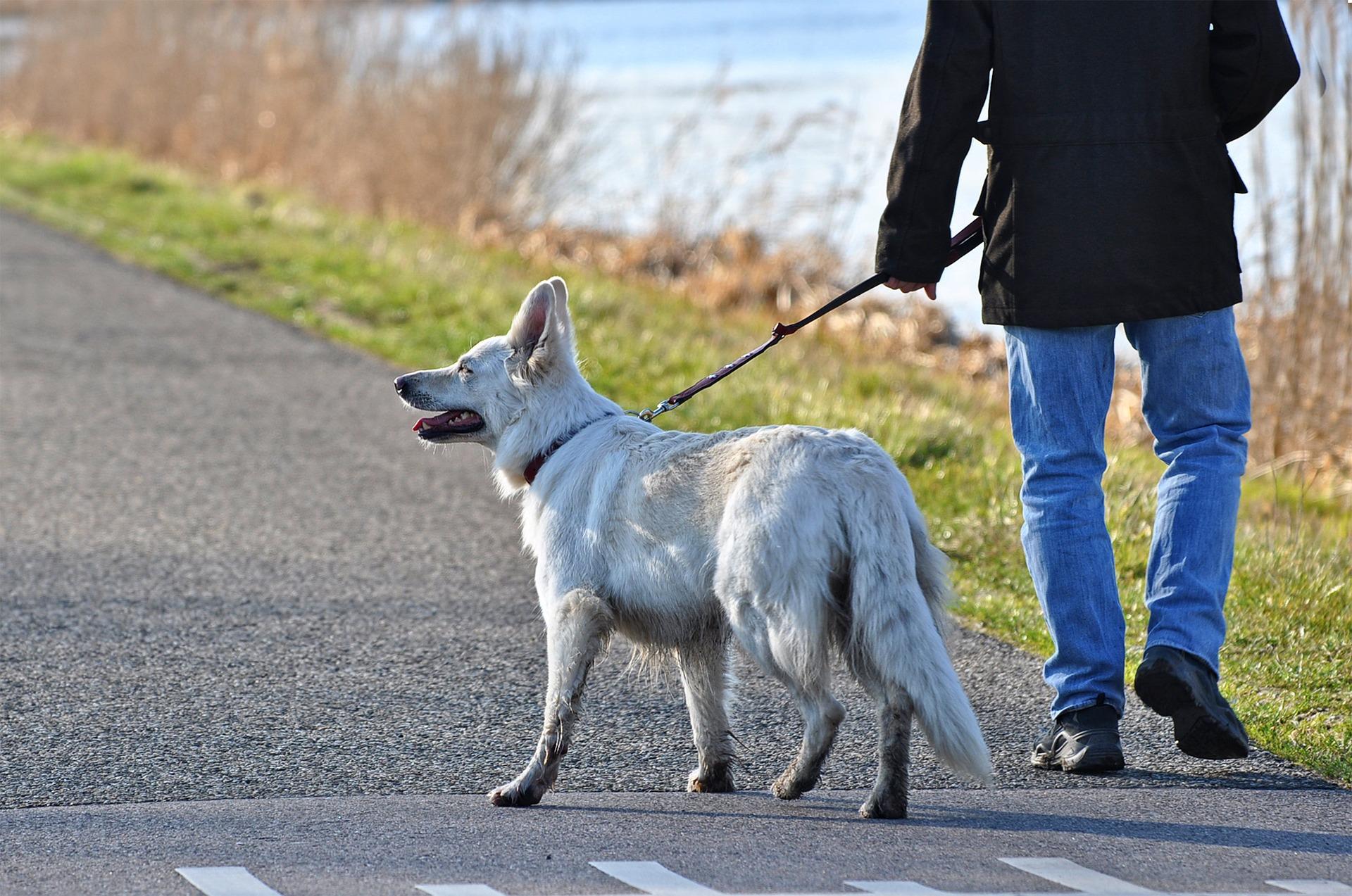 Jedną z przyczyn wymiotowania psa po spacerze jest jedzenie znalezionych na ulicy czy w trawie rzeczy. Nie można pozwalać psu na takie zachowanie. Odpowiednia tresura, a w ostateczności kaganiec przyczynią się do zminimalizowania takich sytuacji.