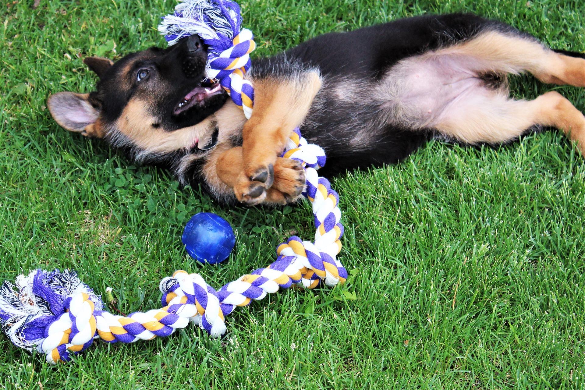 Sznury do zabawy pomagają budować więź między opiekunem i psem. Wspólna zabawa jest świetnie spędzonym czasem.