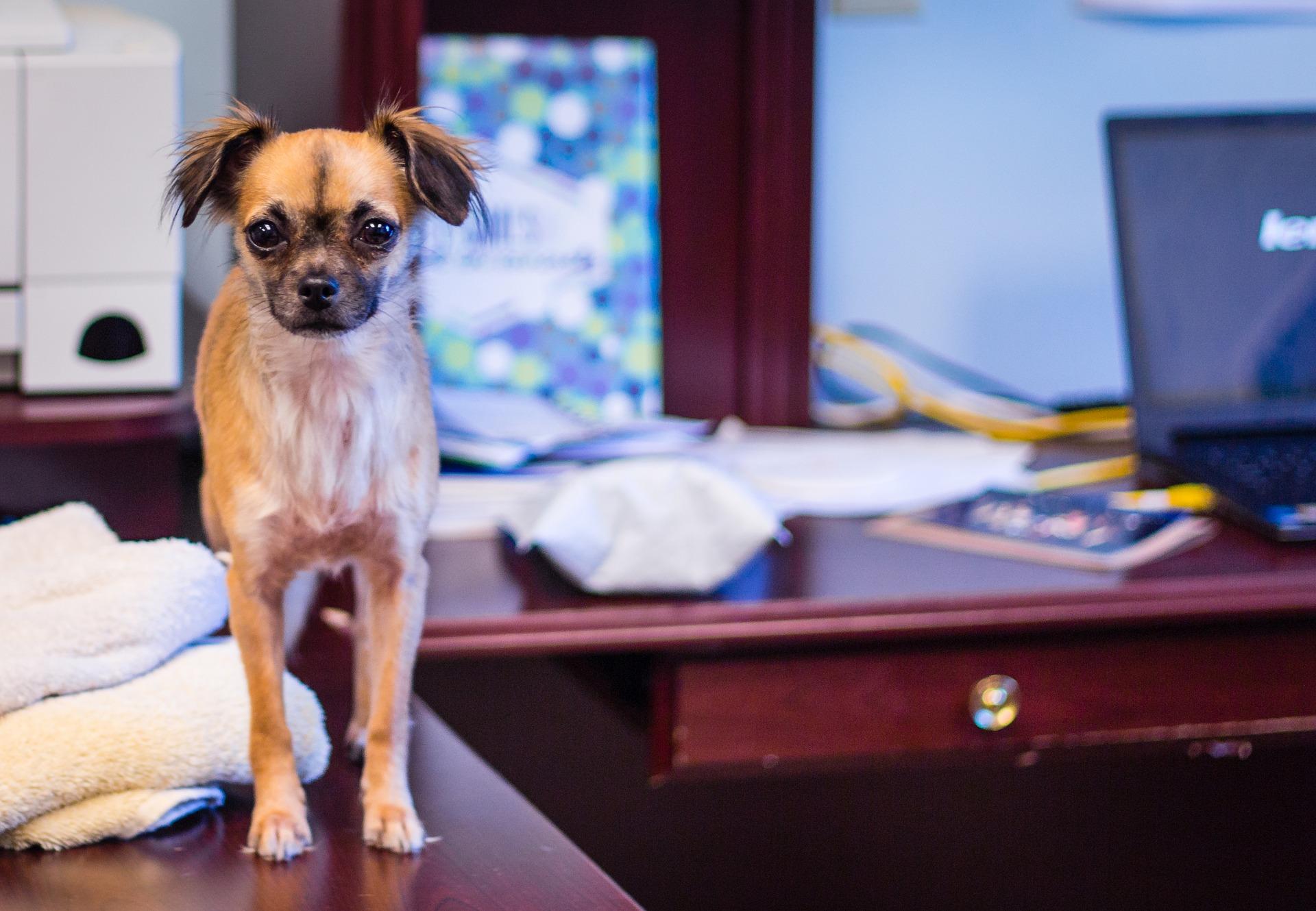 Ubezpieczenie psa w Polsce staje się coraz bardziej popularne, o czym świadczy rosnąca oferta polis dla czworonogów. Niektóre firmy zastrzegają sobie możliwość objęcia nimi określonej liczby zwierząt