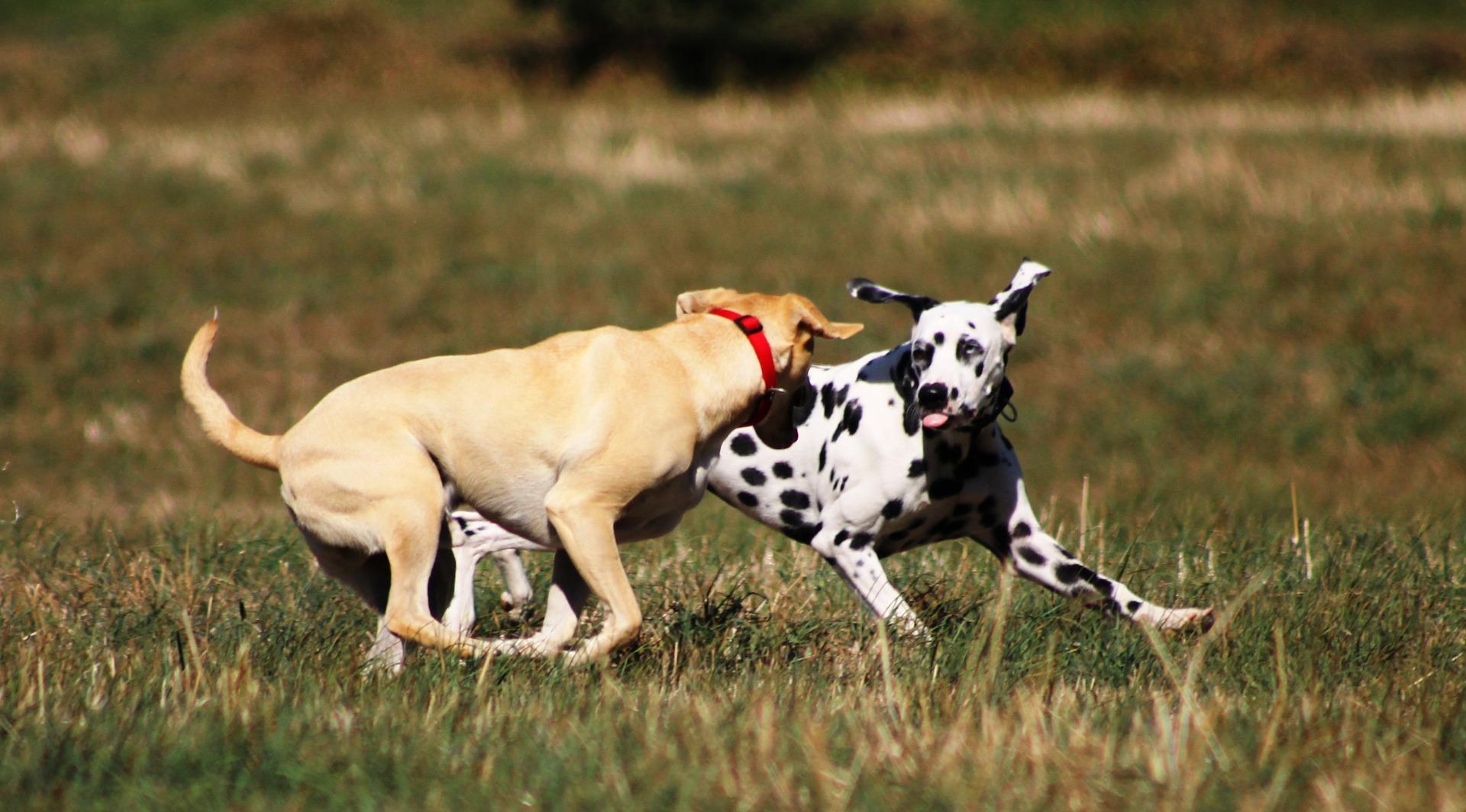 Hotel dla psów zapewnia profesjonalną opiekę zwierzętom, których opiekunowie muszą wyjechać na jakiś czas, a nie mają z kim zostawić pupila.