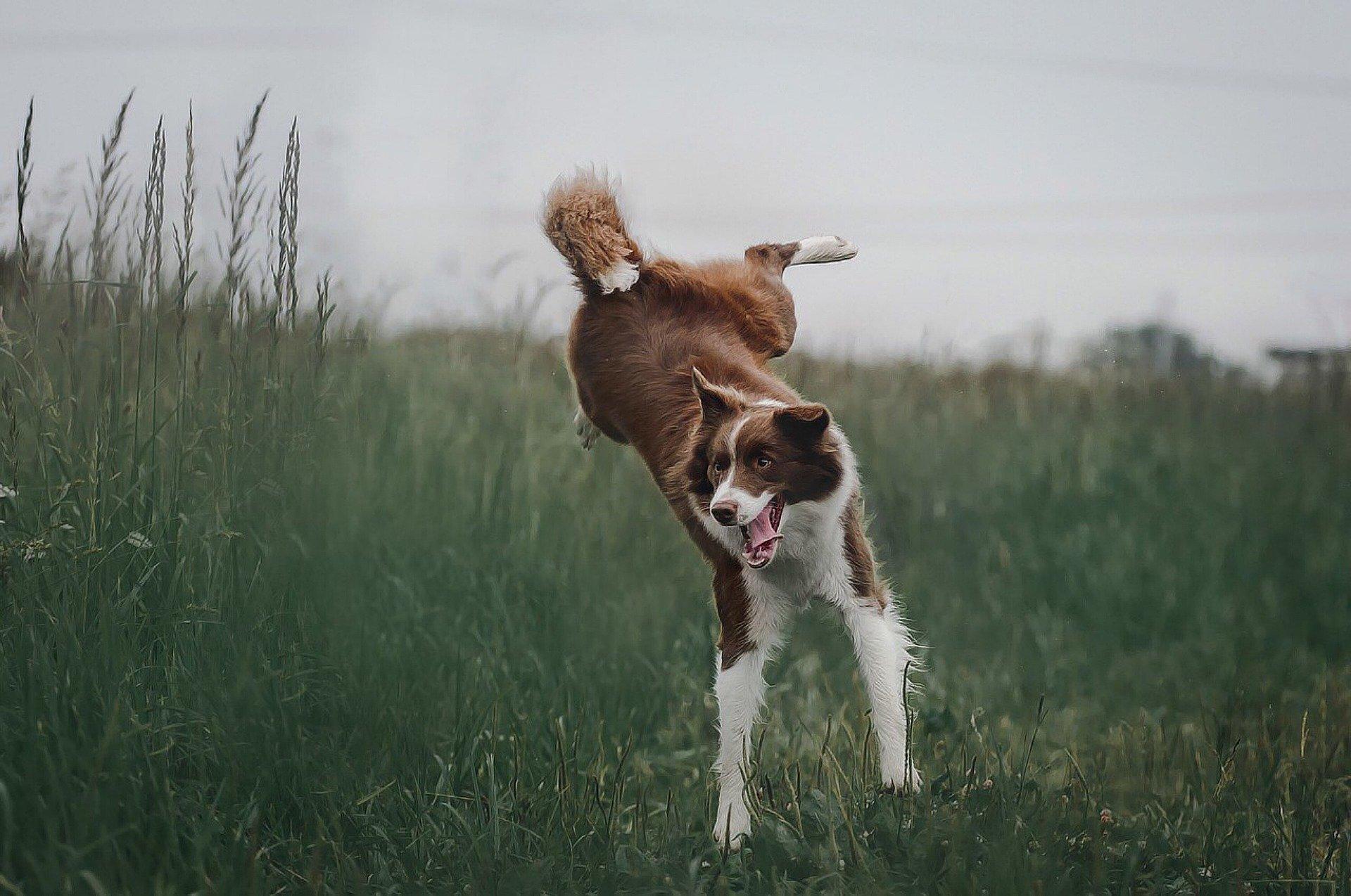 Nie można całkowicie wykluczyć pojawienia się zapalenia stawów u psów, ale można zminimalizować to ryzyko, np. poprzez odpowiednie żywienie i aktywność dostosowana do wieku i możliwości psa.