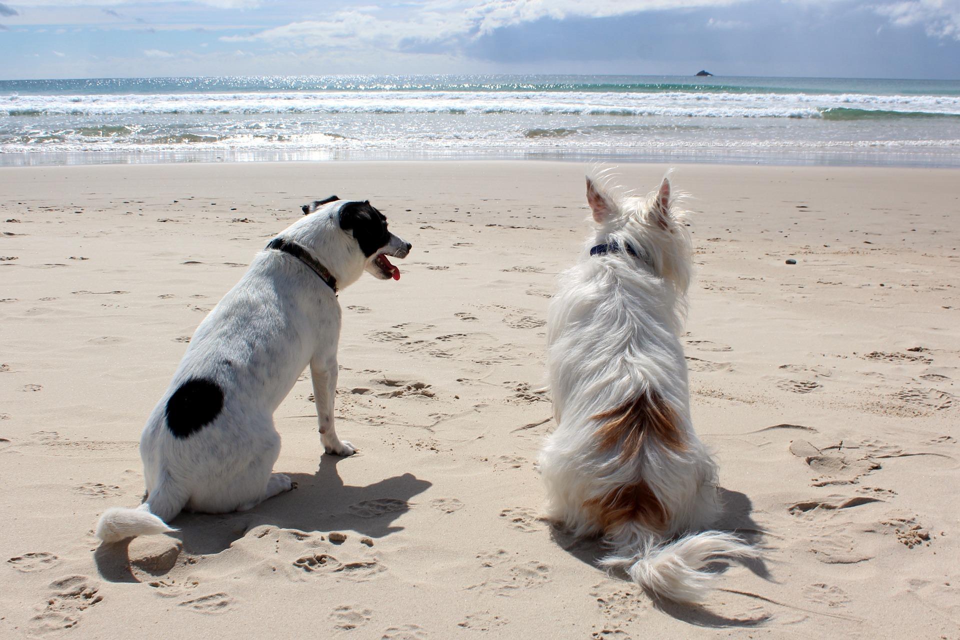 Podczas pobytu z psem na plaży należy zachować szczególną ostrożność, zawsze mieć ze sobą smycz i kaganiec fizjologiczny. Należy mieć na uwadze innych wczasowiczów i nie pozwalać psu na zabawę czy kopanie w ich pobliżu.