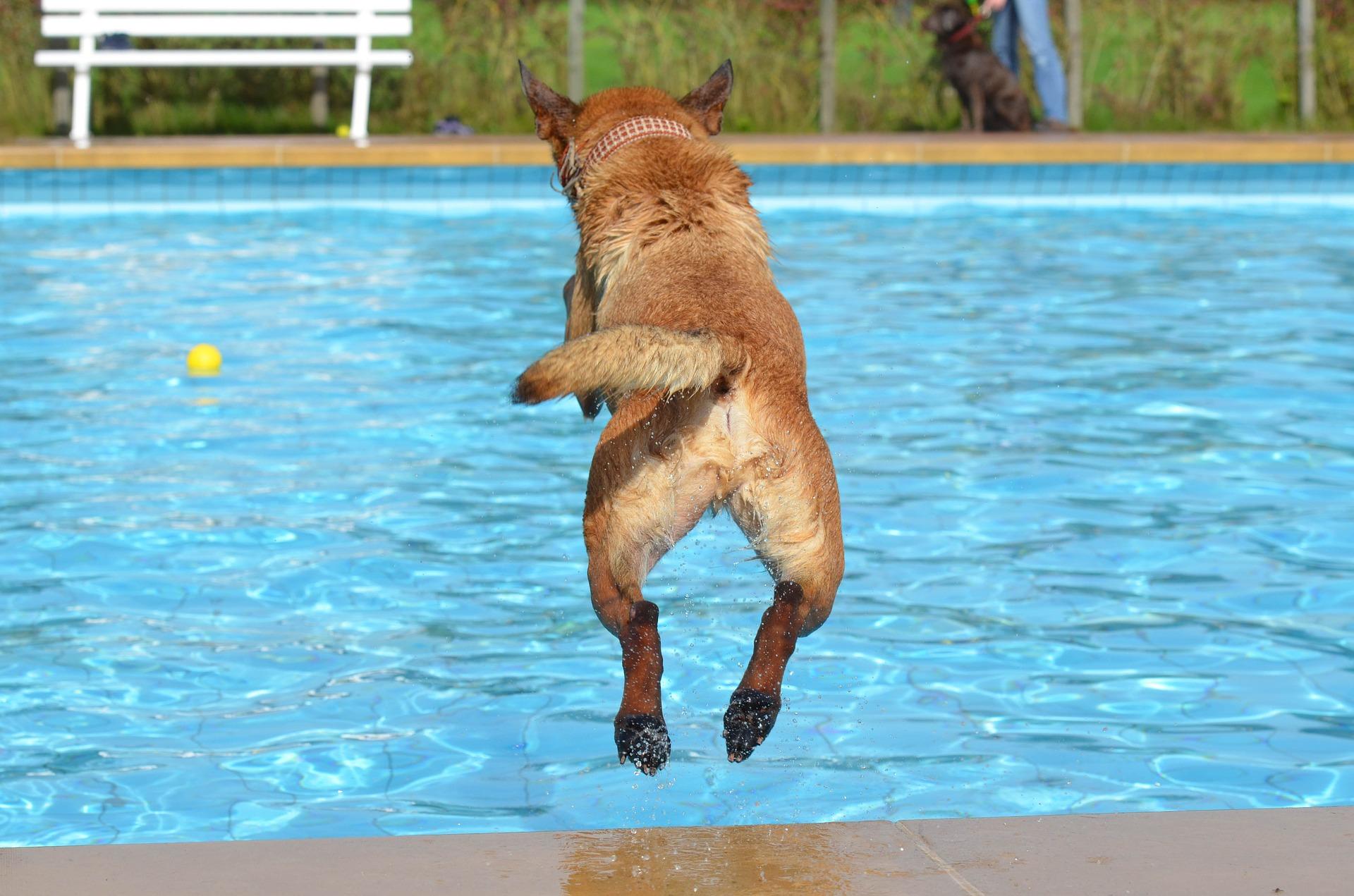 Pies przebywający na dworze podczas upałów musi mieć zapewniony dostęp do dużej ilości wody i do cienia. Warto też umożliwić mu dostęp do pomieszczeń - domu, garażu, a także pomyśleć nad montażem spryskiwacza lub rozpylacza ogrodowego.