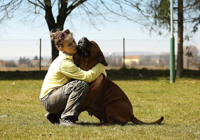 Mastiff przytula się do opiekuna.