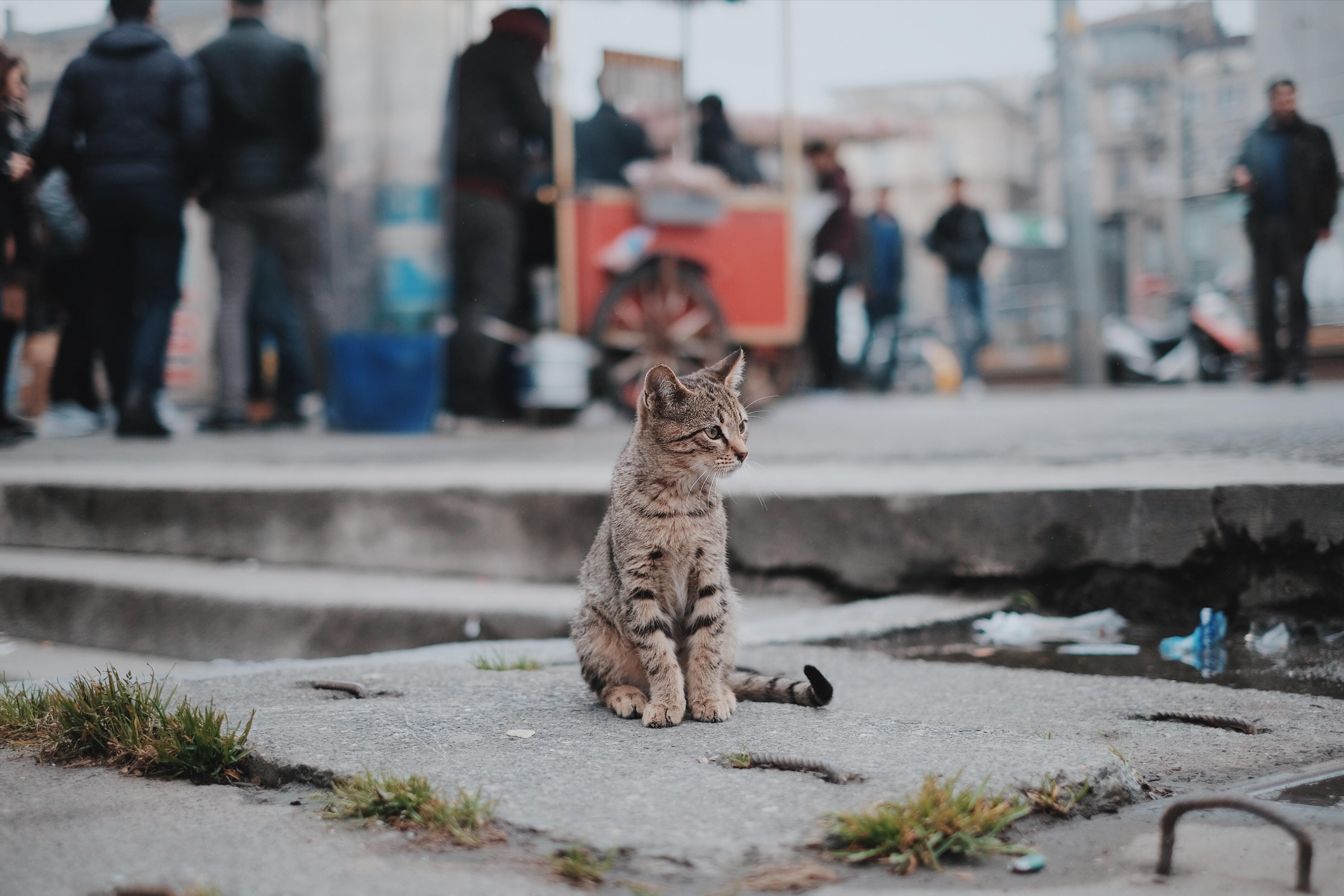 Młody, zagubiony kociak siedzi na ulicy, pośród tłumu, kałuż i śmieci. Ulica nie powinna być miejscem dla kotów.