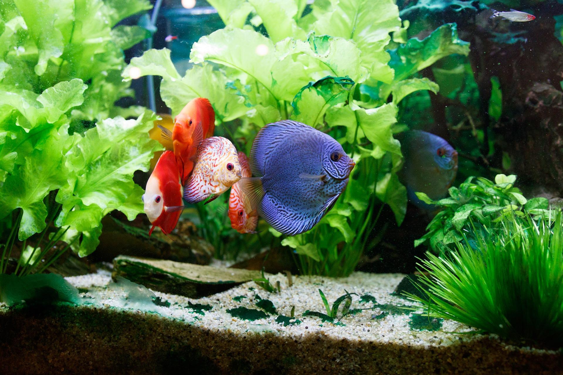 Najpopularniejszym stylem aranżacji akwariów jest styl na wzór naturalnego. Wśród niego można wyróżnić np. iwagumi, ryuboku, mizube, ragwork.