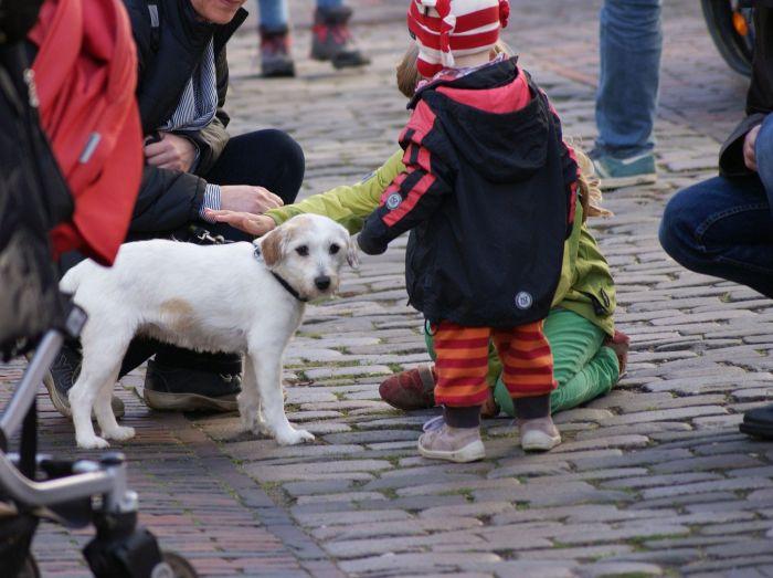 Dzieci podchodzą głaskać psa na ulicy.