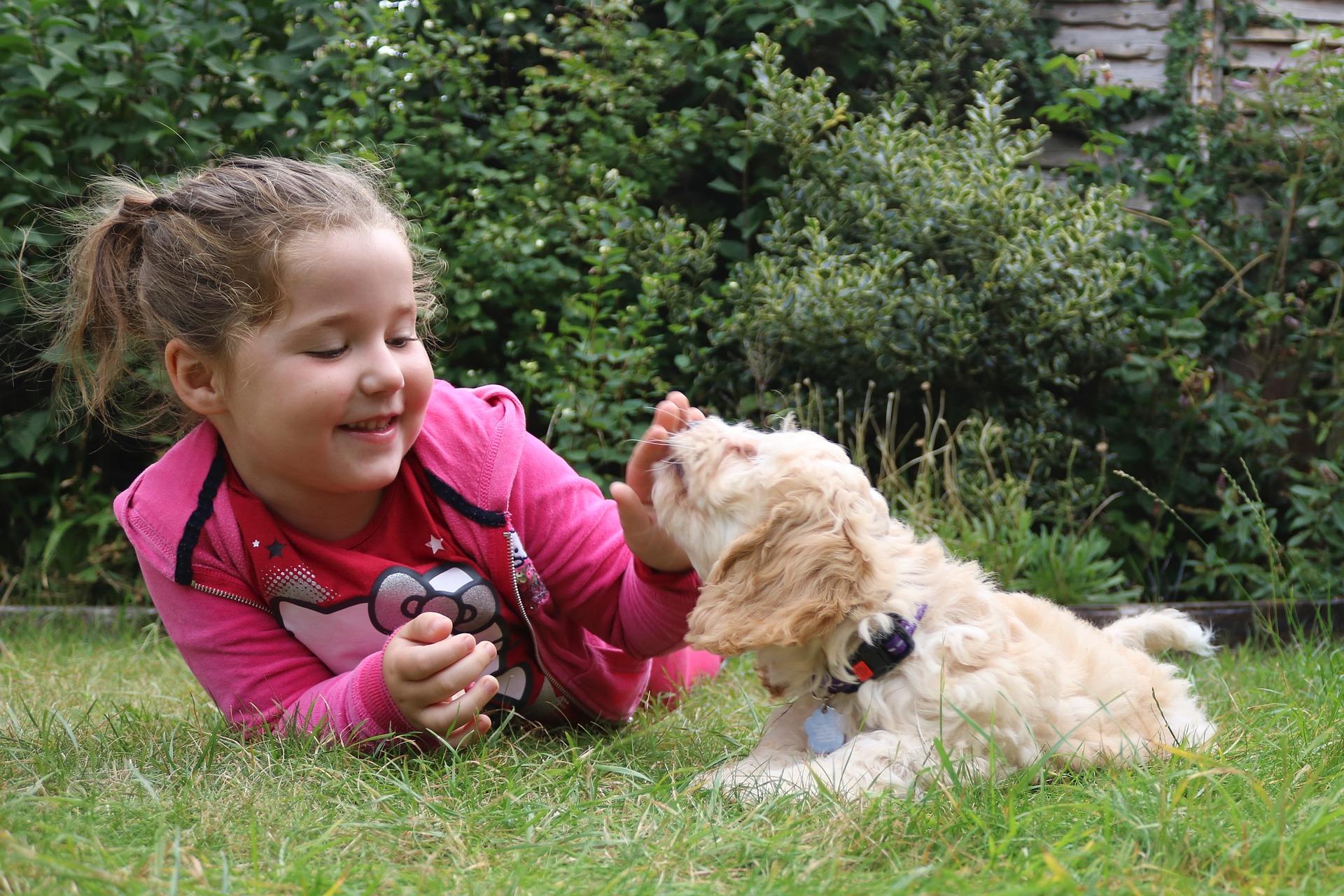 Cockapoo są bardzo rodzinnymi psami, lubią zabawę i pieszczoty.