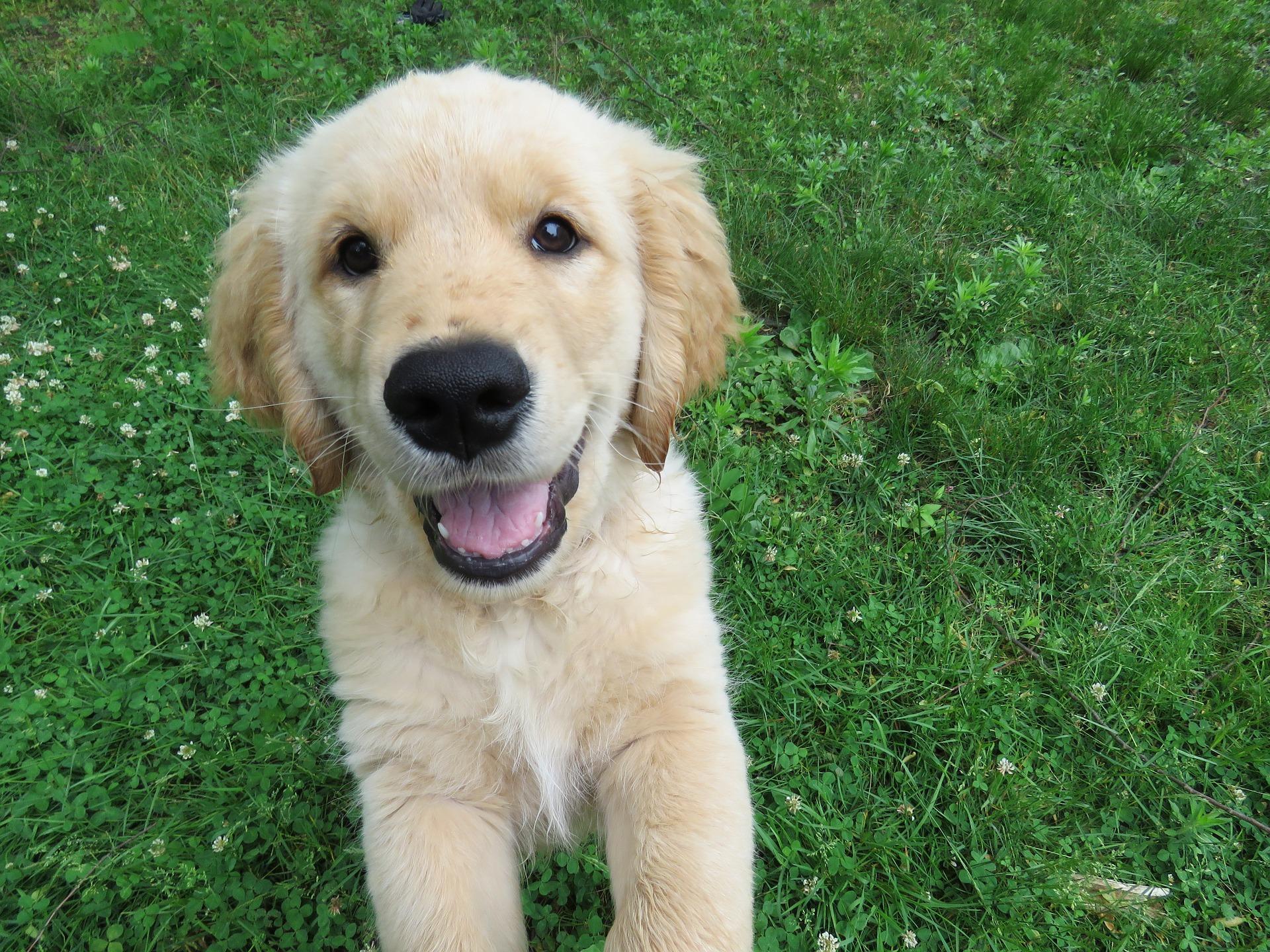Plac zabaw dla psów to miejsce, w którym pies może spożytkować energię, zaspokoić potrzebę ruchu, rozwijać inteligencję i zdobyć nowe umiejętności.